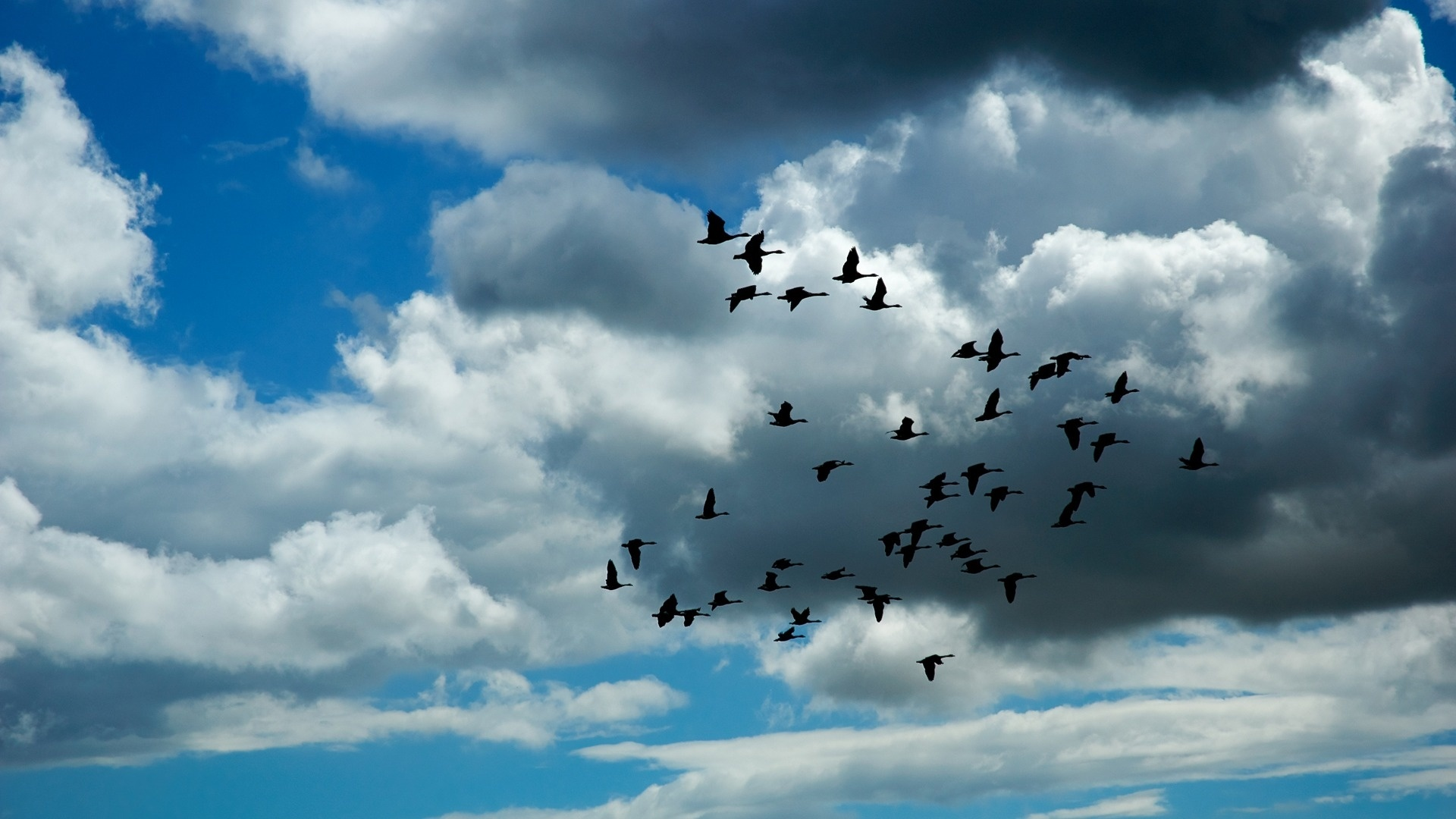 Wedge Birds In The Sky Background