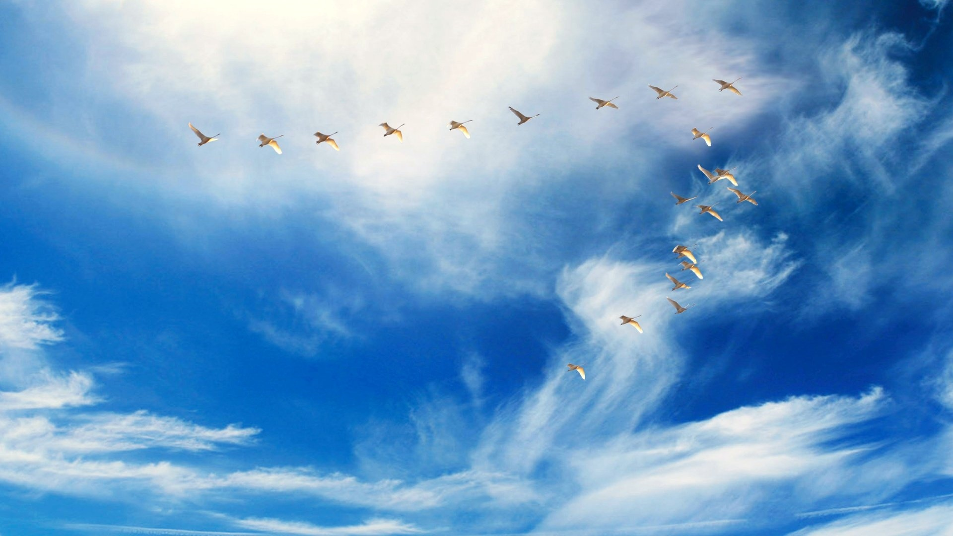 Wedge Birds In The Sky Picture