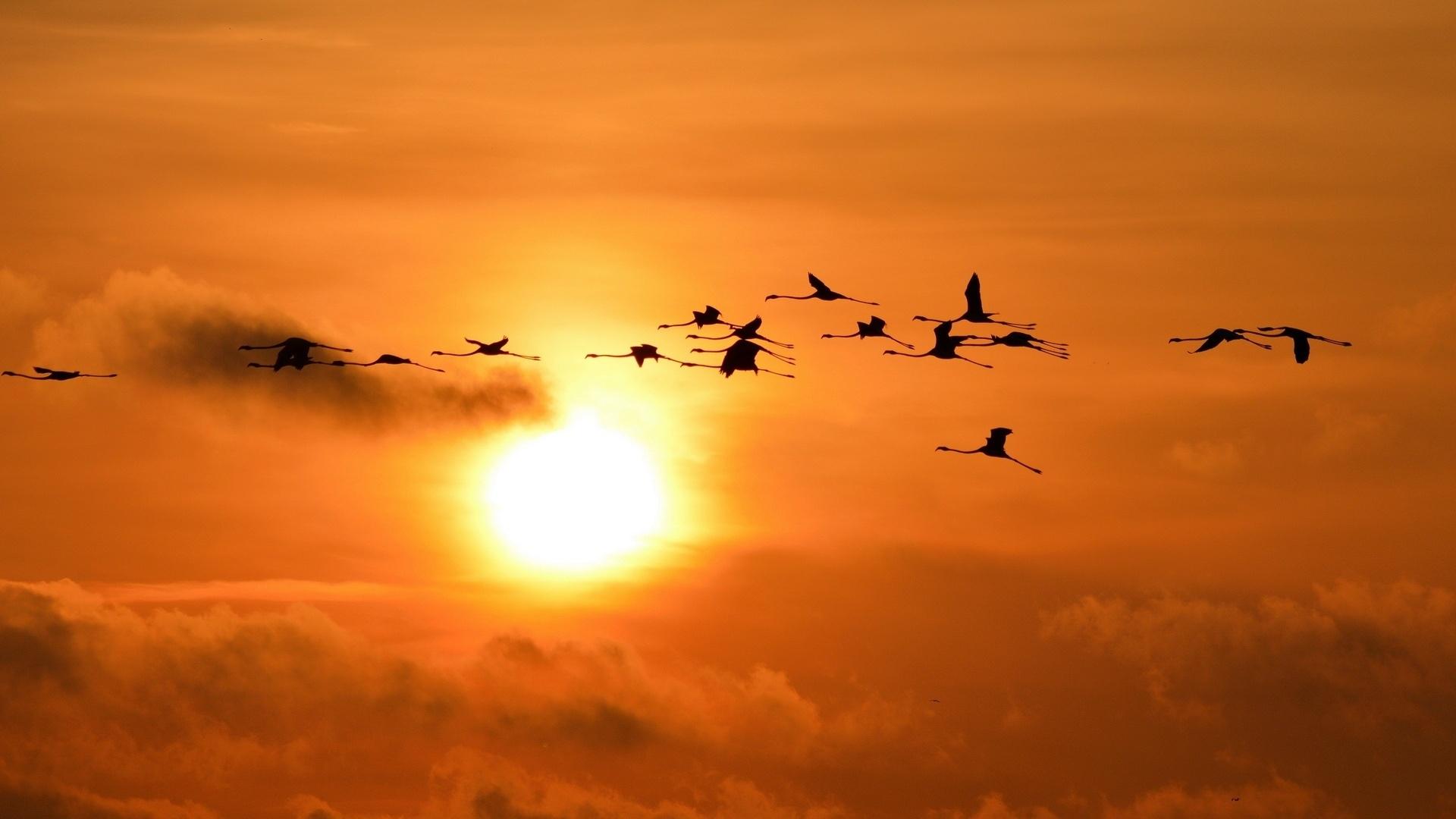Wedge Birds In The Sky wallpaper for computer