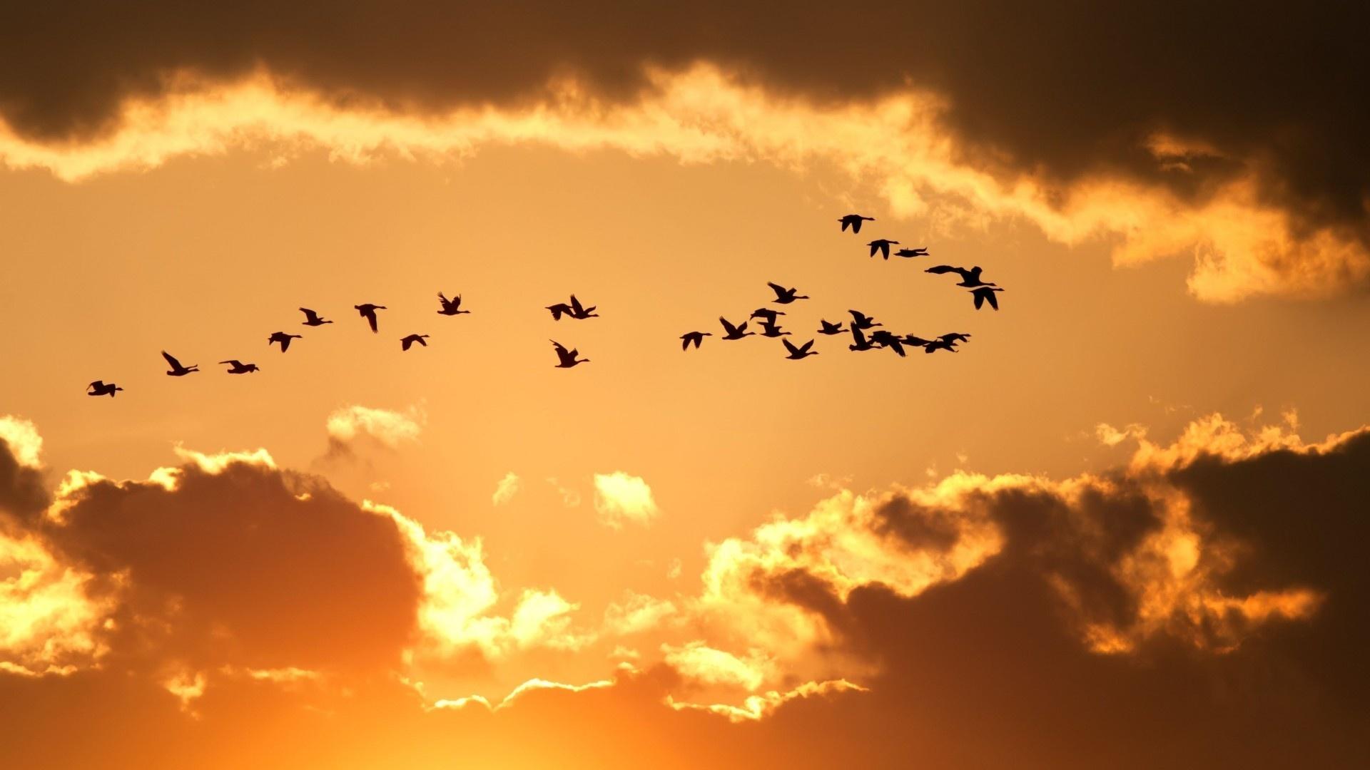 Wedge Birds In The Sky Wallpaper theme
