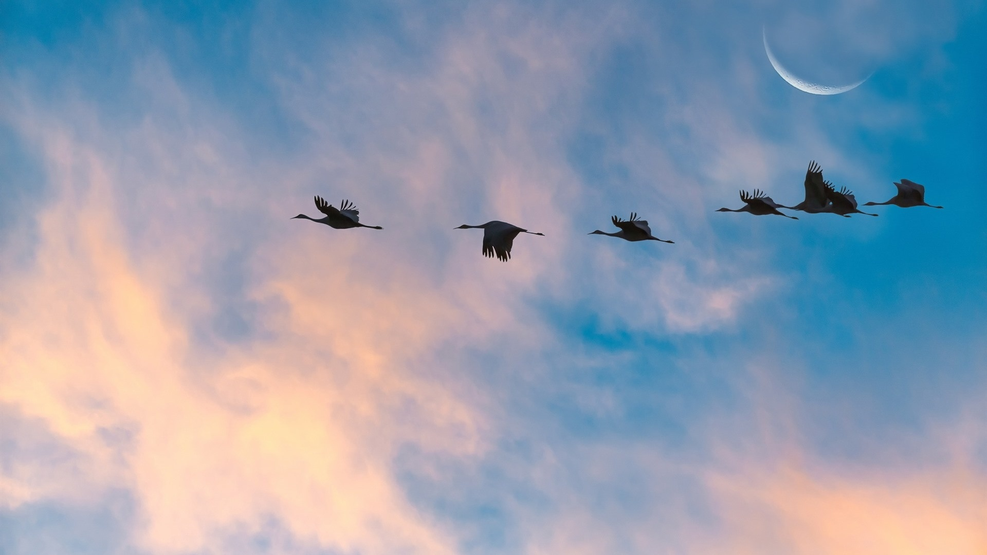 Wedge Birds In The Sky wallpaper for pc