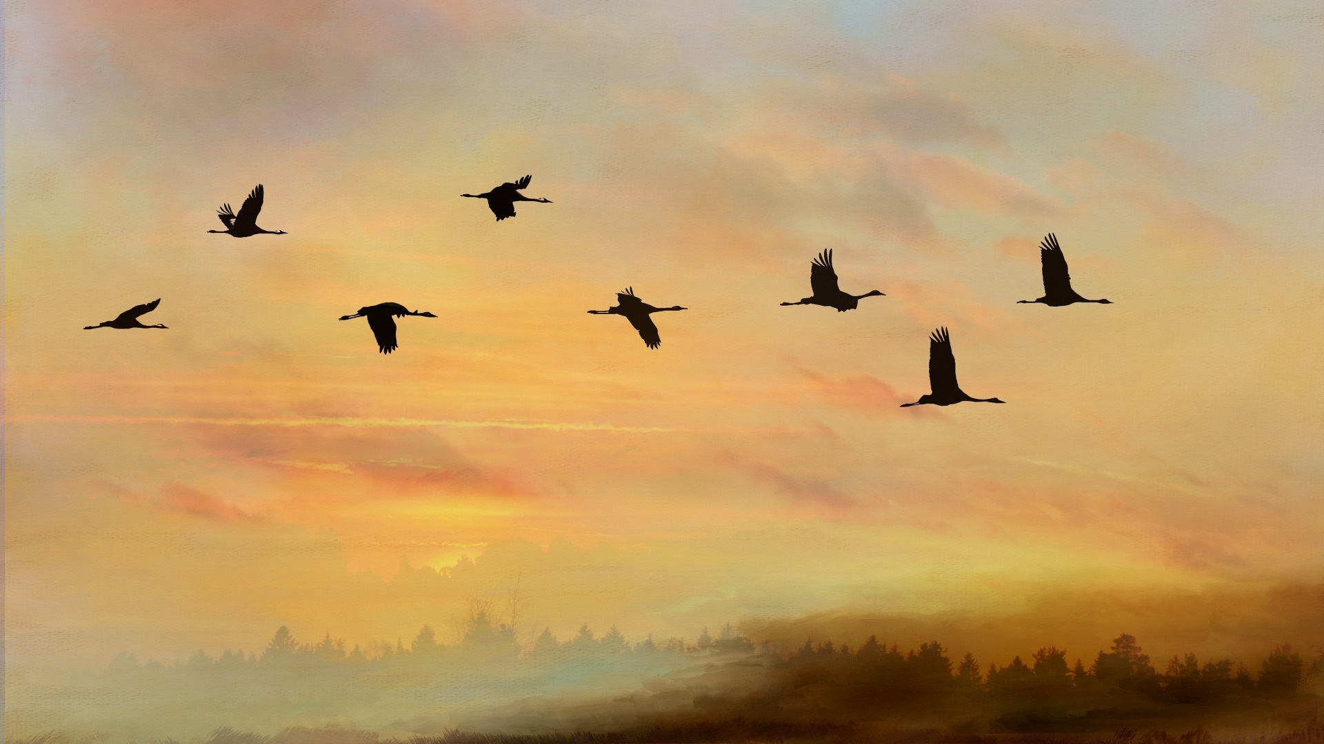 Wedge Birds In The Sky HD Wallpaper