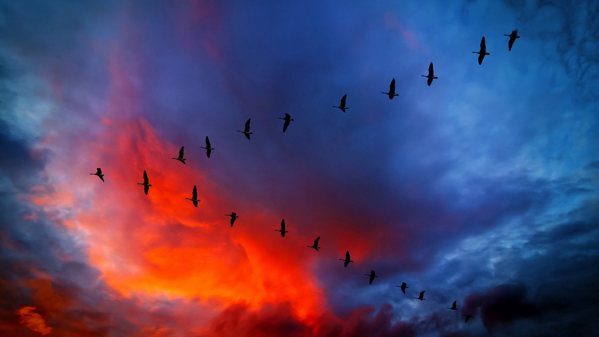 Wedge Birds In The Sky wallpaper photo hd
