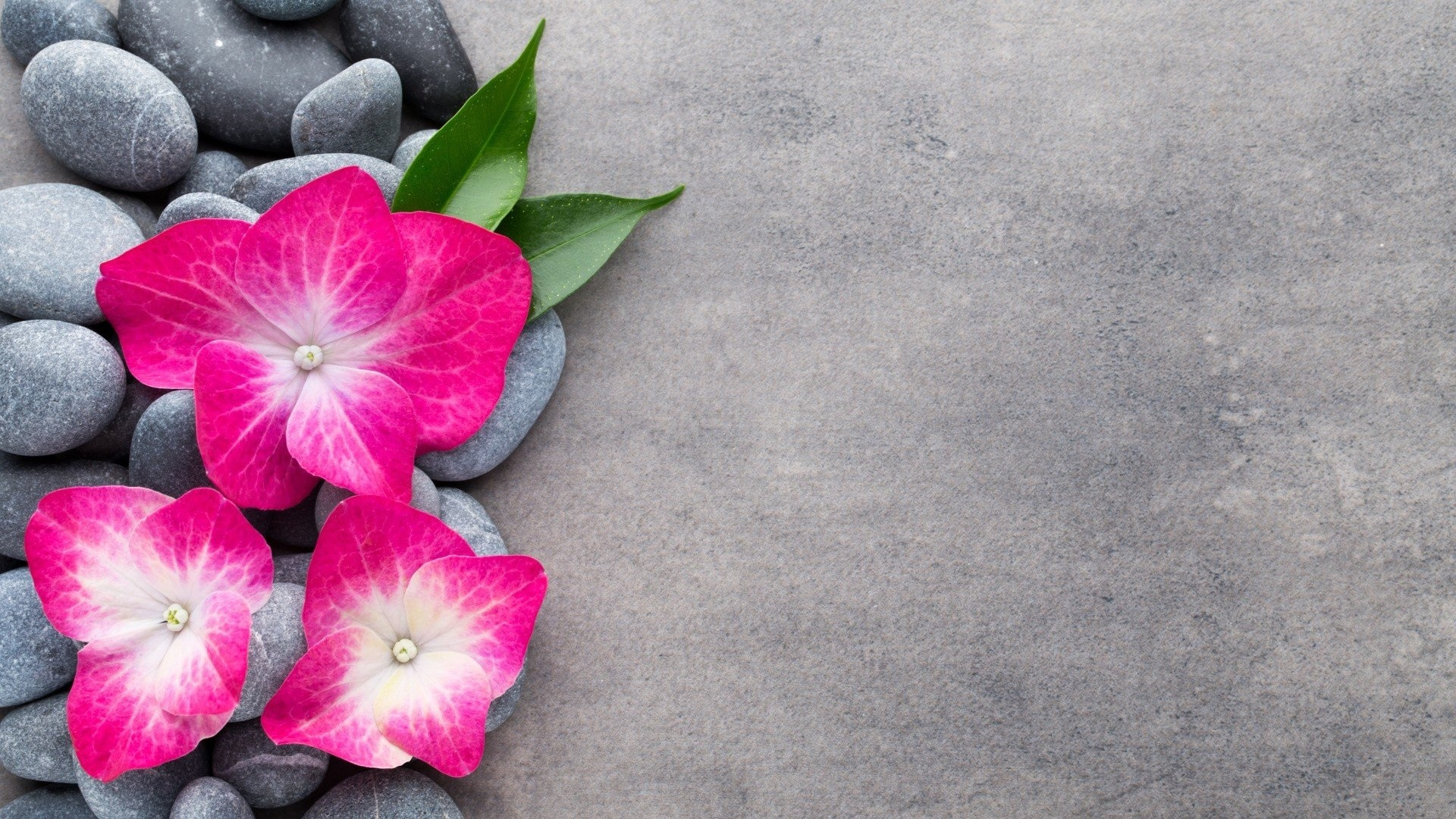 Flower And Stones Wallpaper