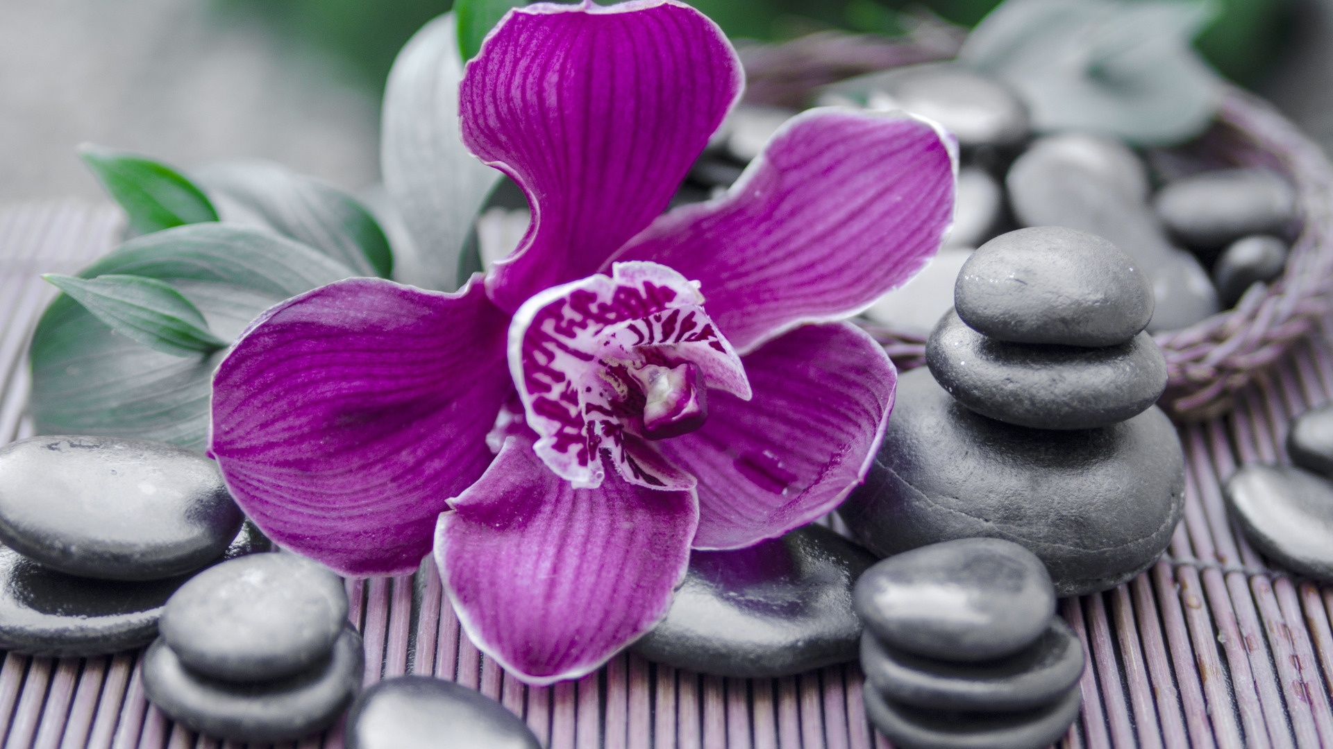 Flower And Stones Desktop Wallpaper
