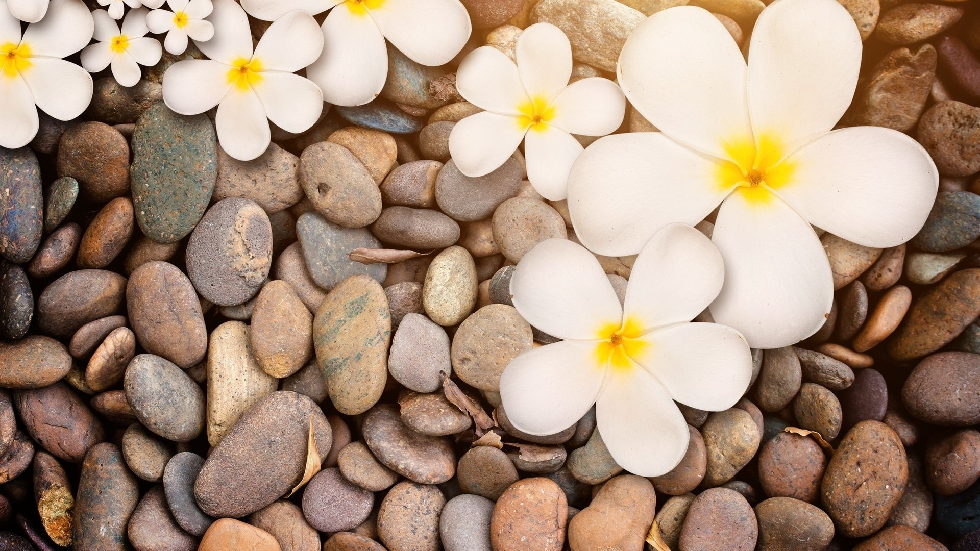 Flower And Stones wallpaper photo hd