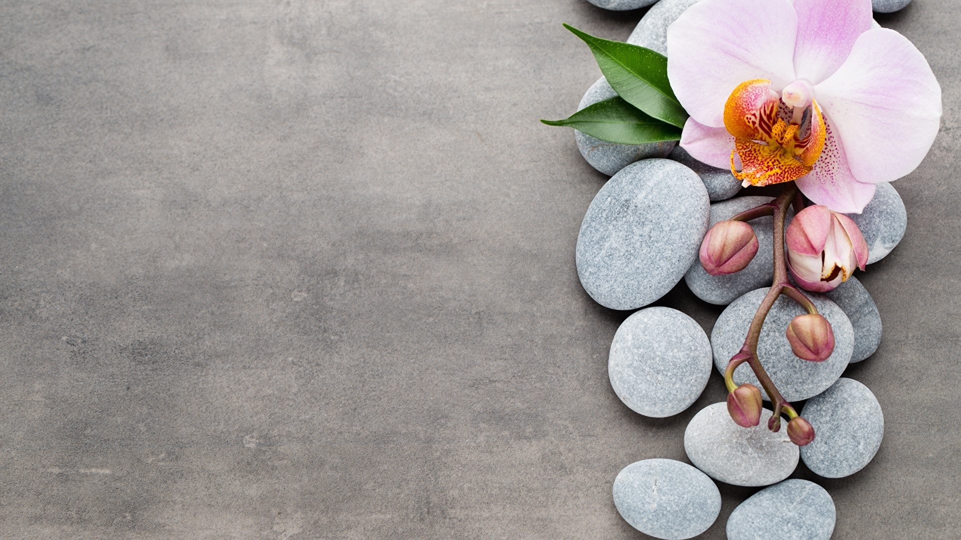 Flower And Stones Pic