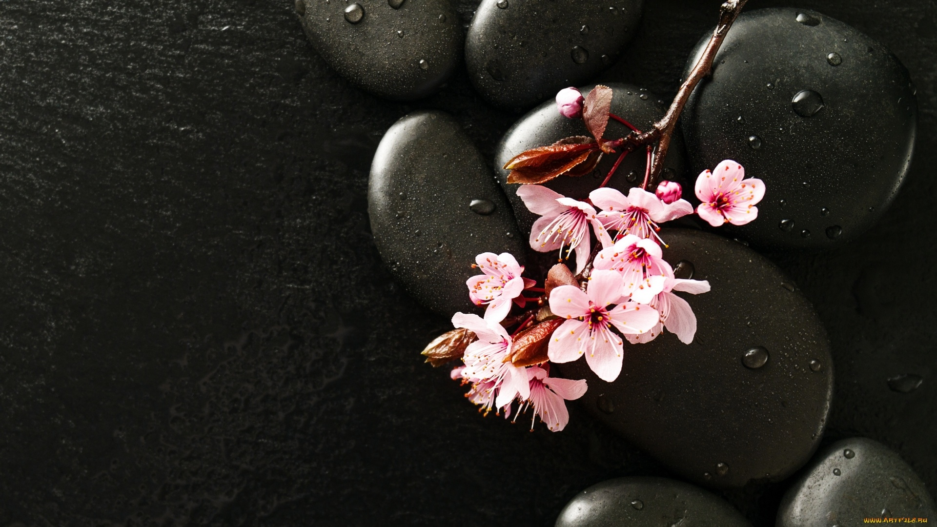 Flower And Stones wallpaper for pc
