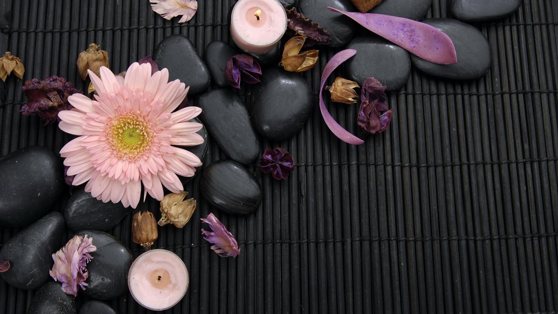 Flower And Stones desktop wallpaper hd