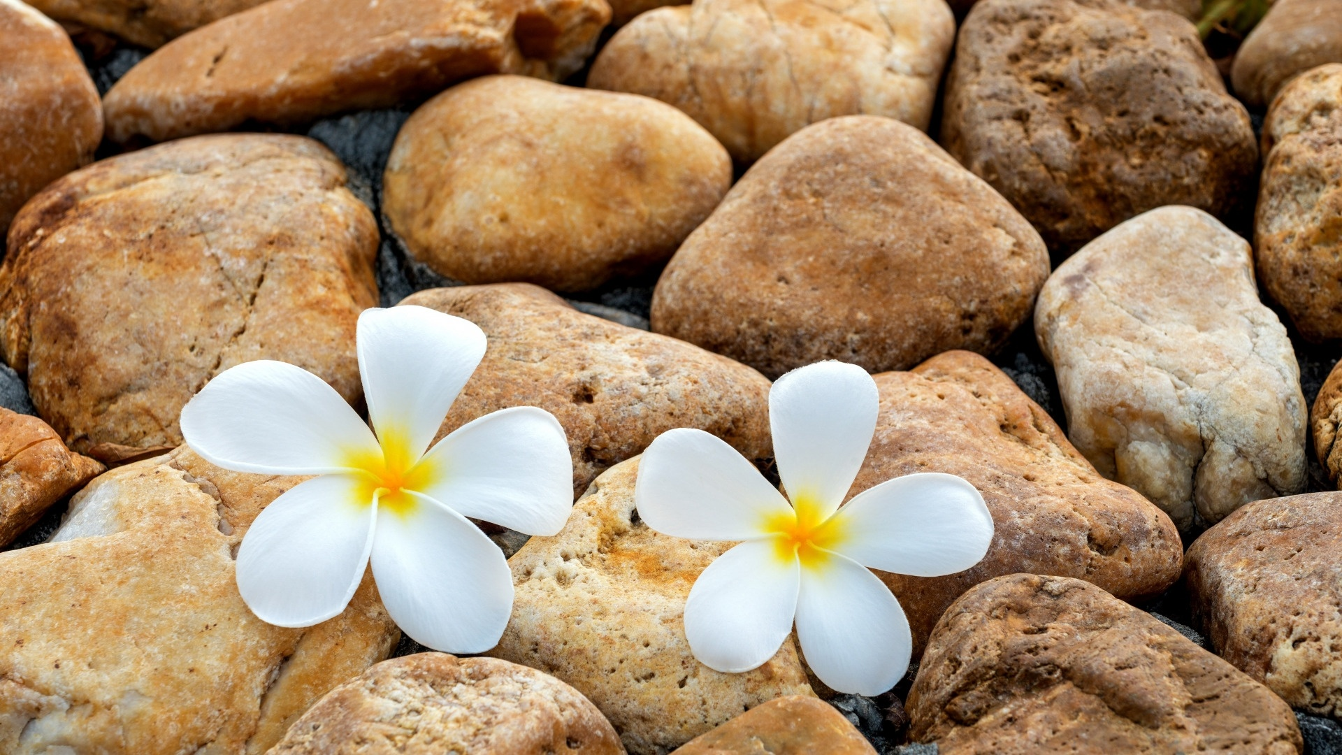 Flower And Stones Background