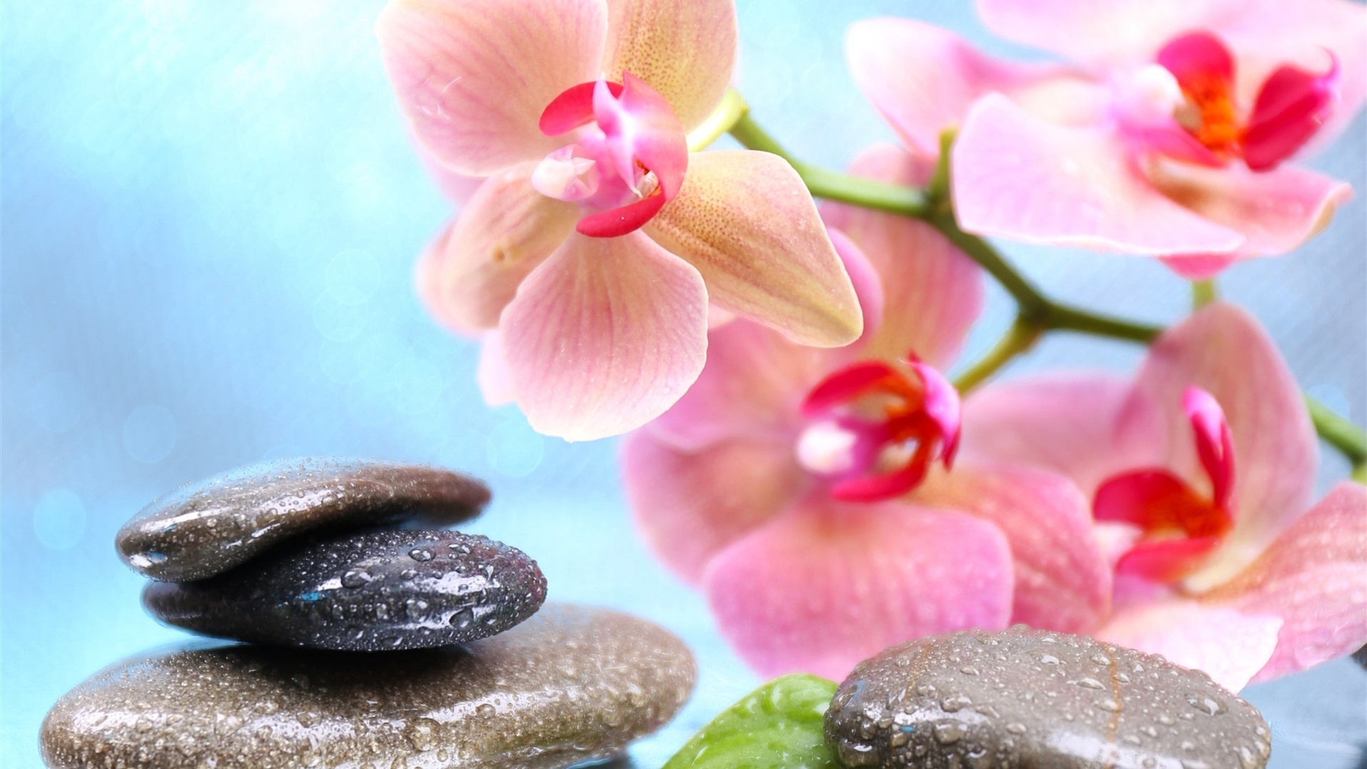 Flower And Stones HD Wallpaper