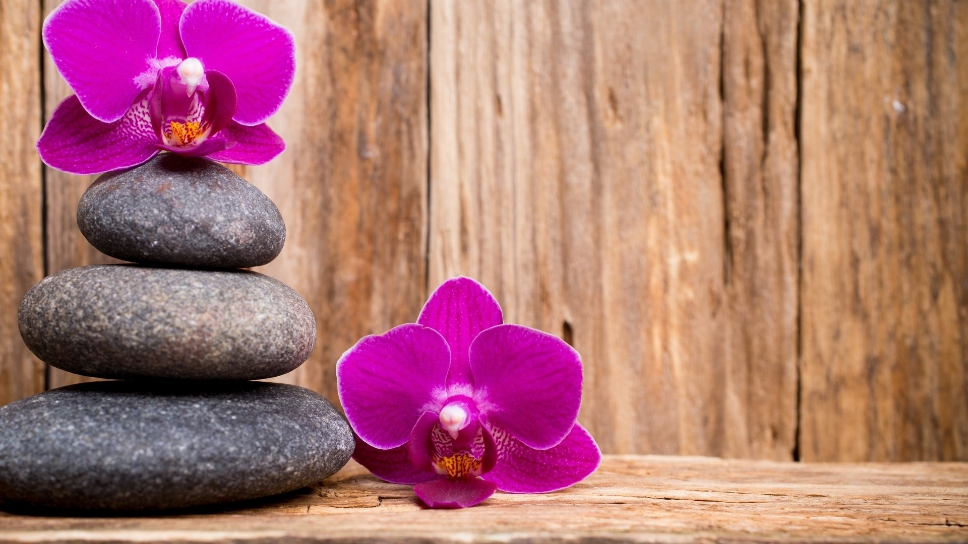 Flower And Stones Picture