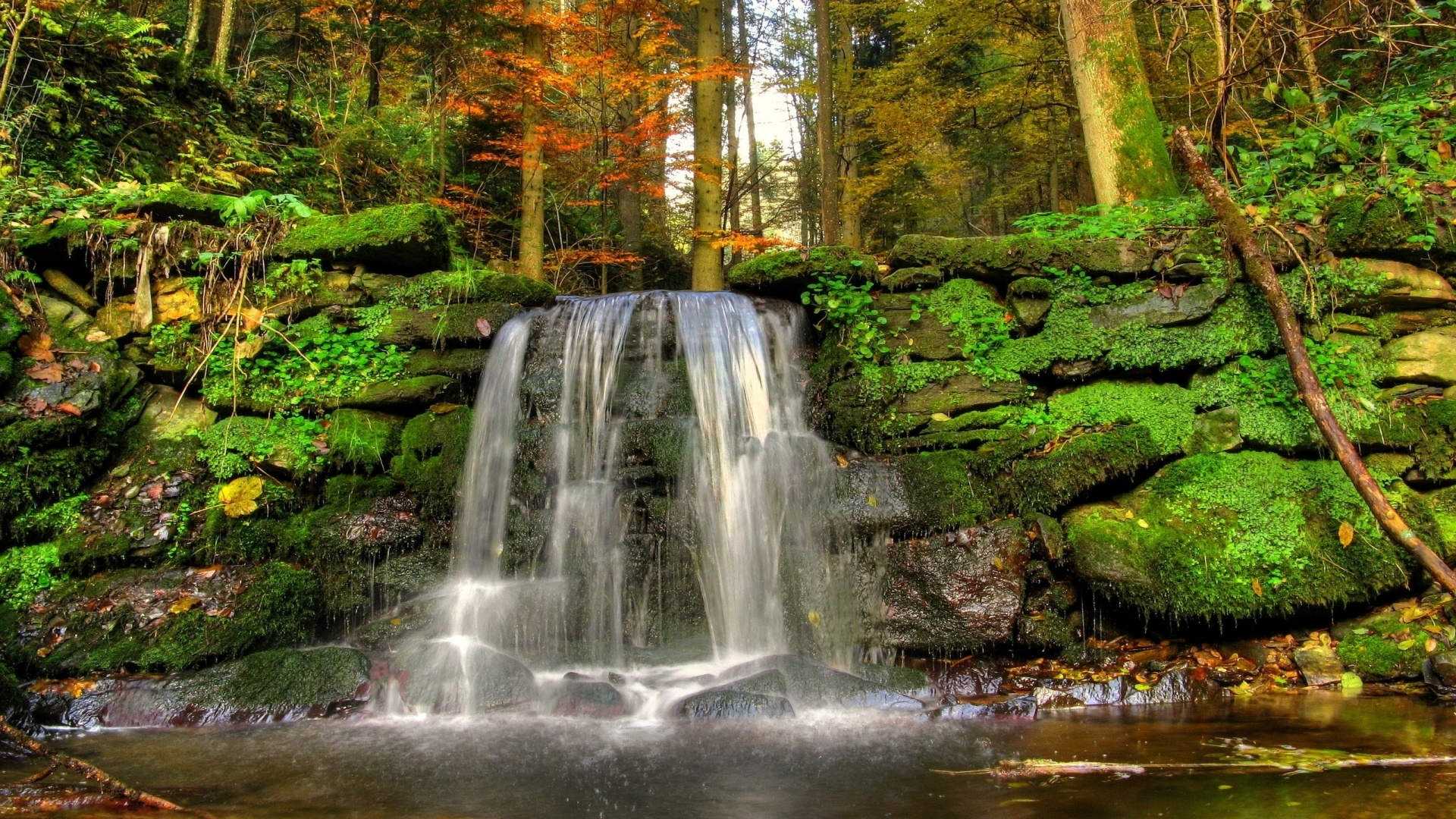 Forest Waterfall HD Wallpaper