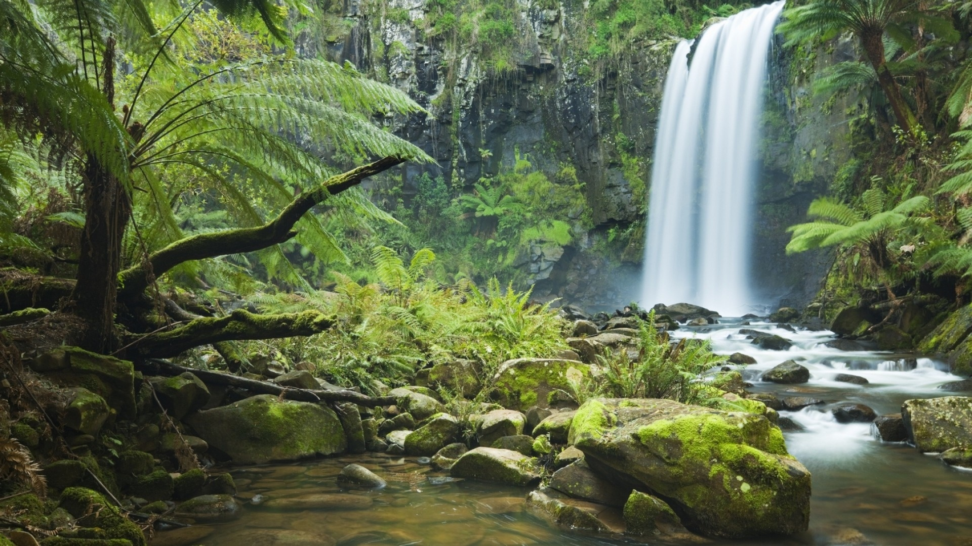 Forest Waterfall Image