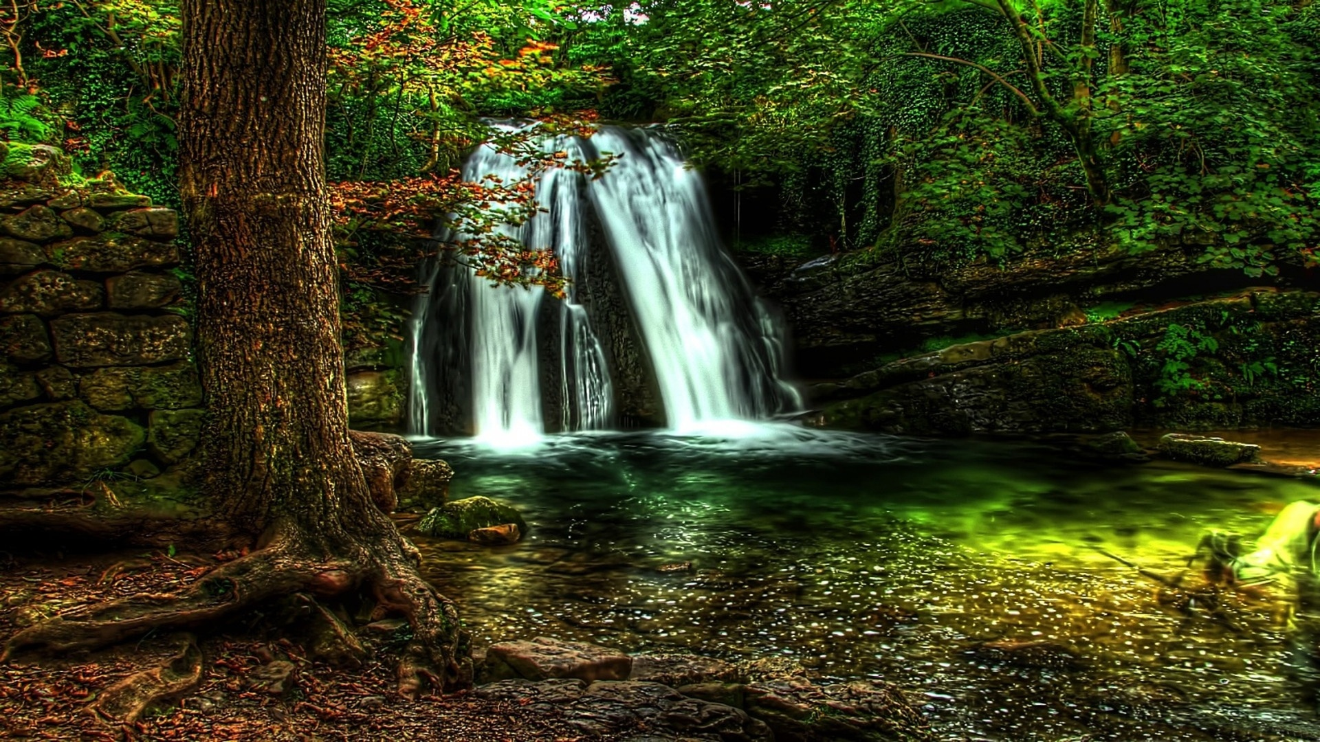 Forest Waterfall Picture