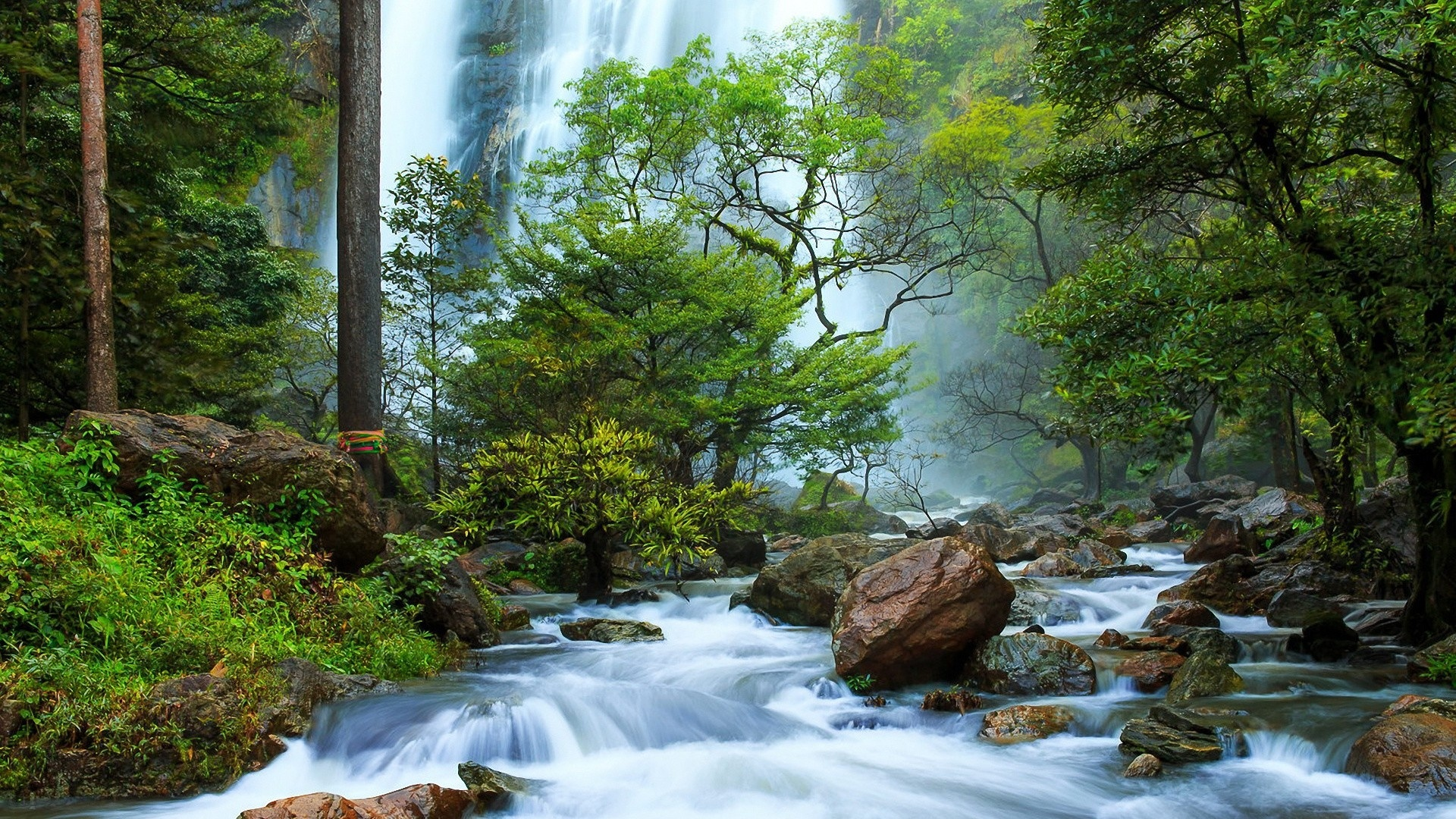 Forest Waterfall desktop wallpaper hd