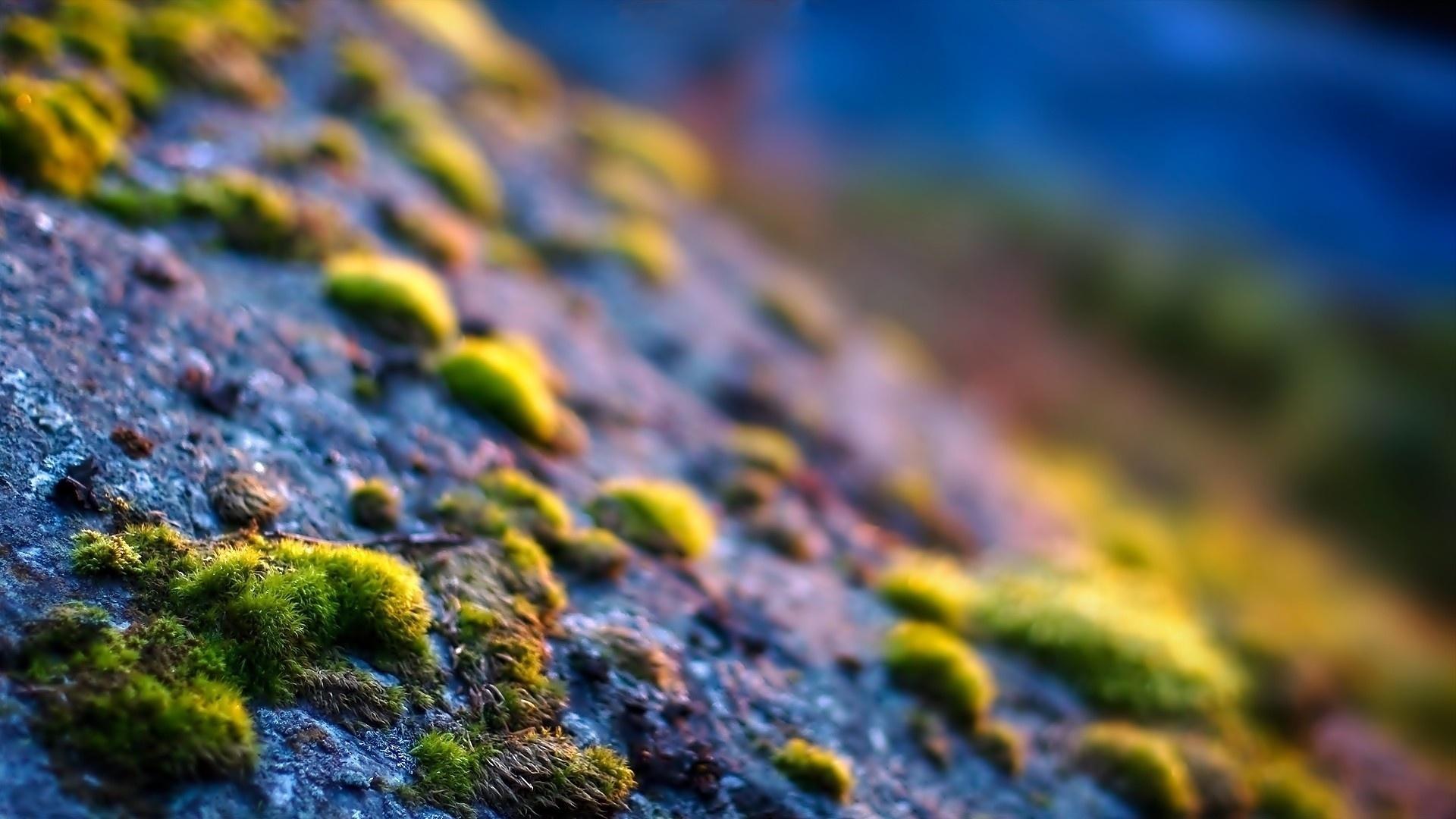 Stones And Moss desktop wallpaper hd