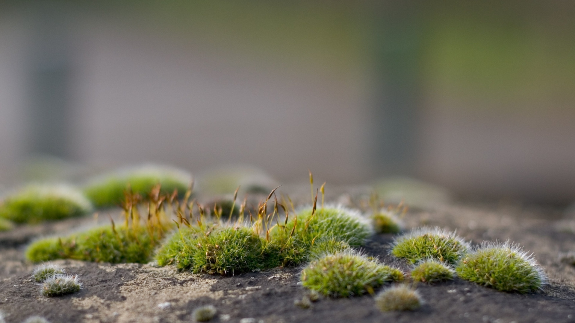 Stones And Moss wallpaper for computer