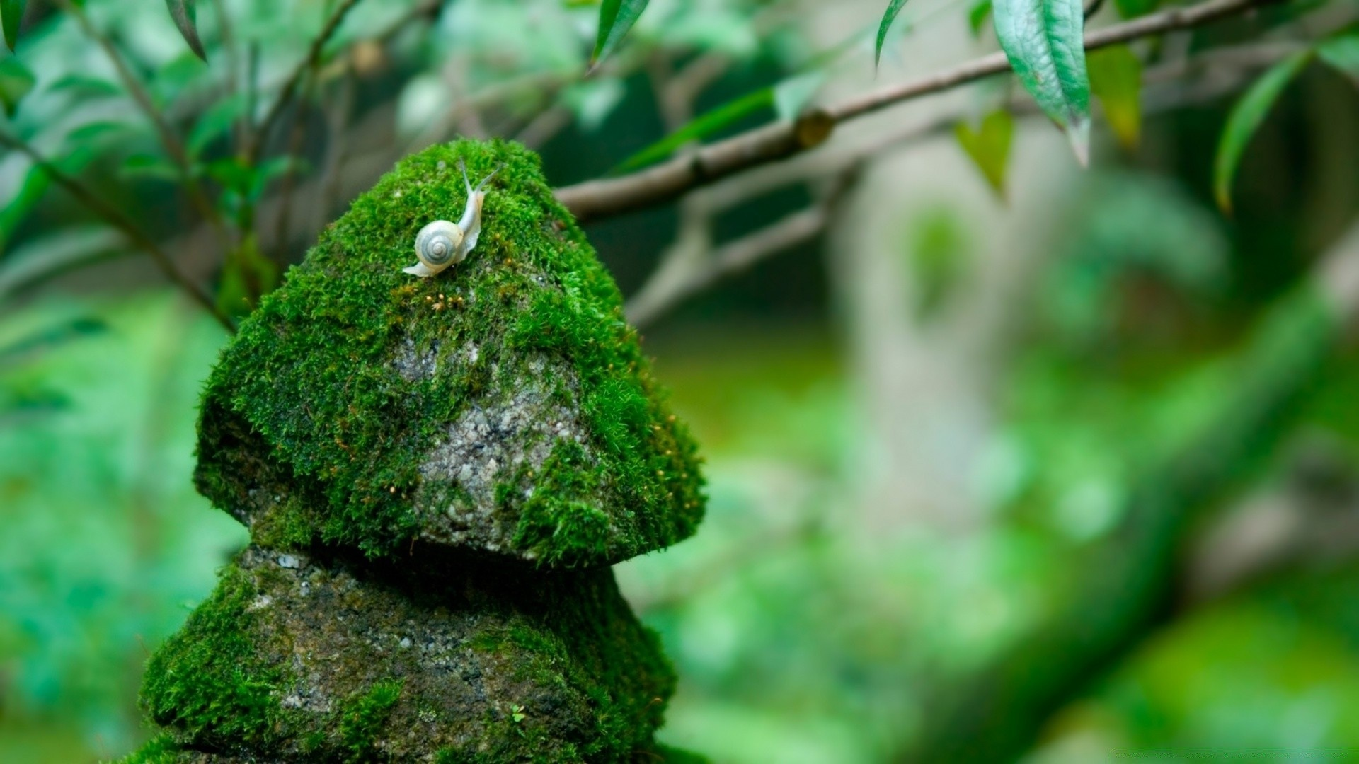 Stones And Moss Picture