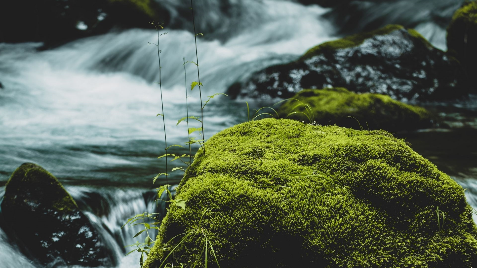 Stones And Moss wallpaper for pc