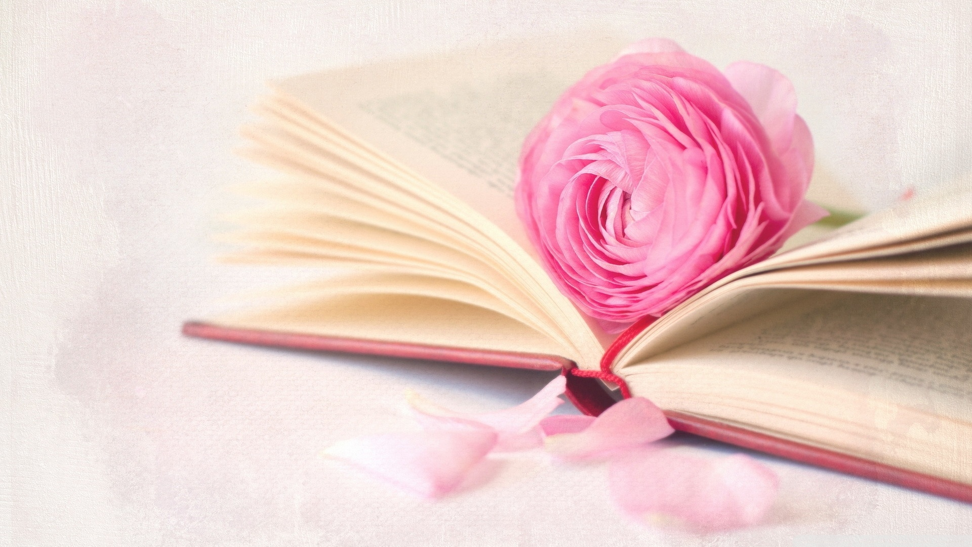 Book And Flower Picture