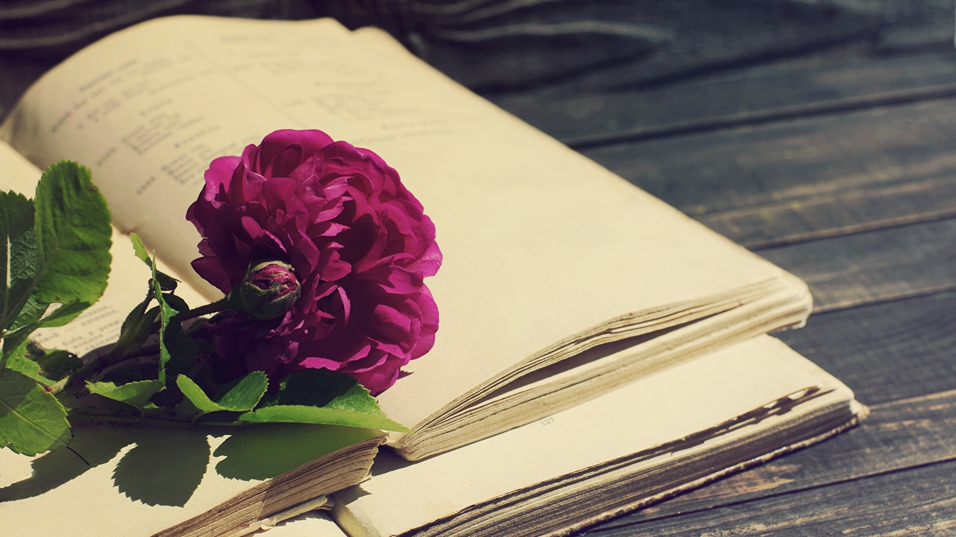Book And Flower wallpaper for pc