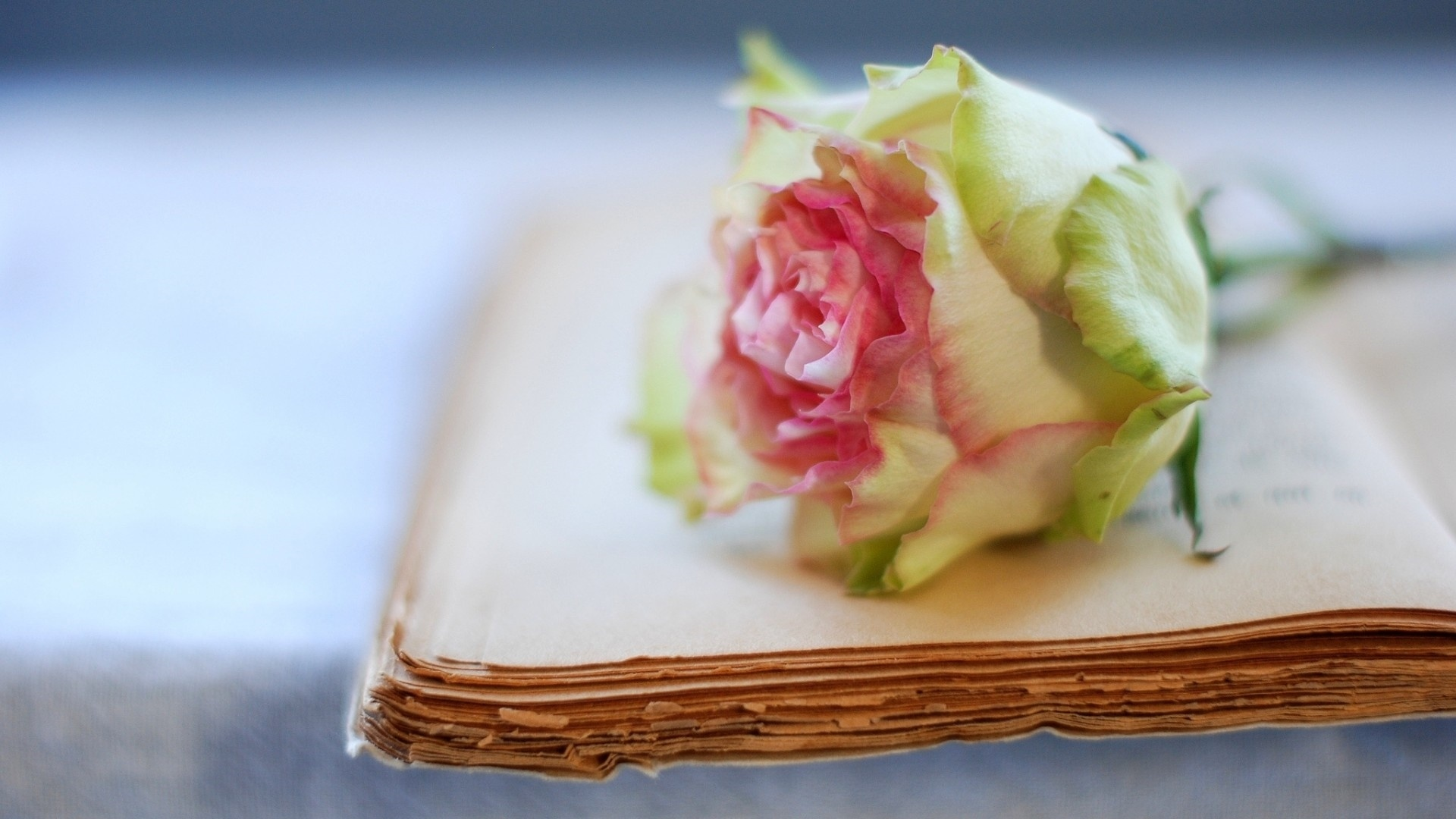 Book And Flower Wallpaper