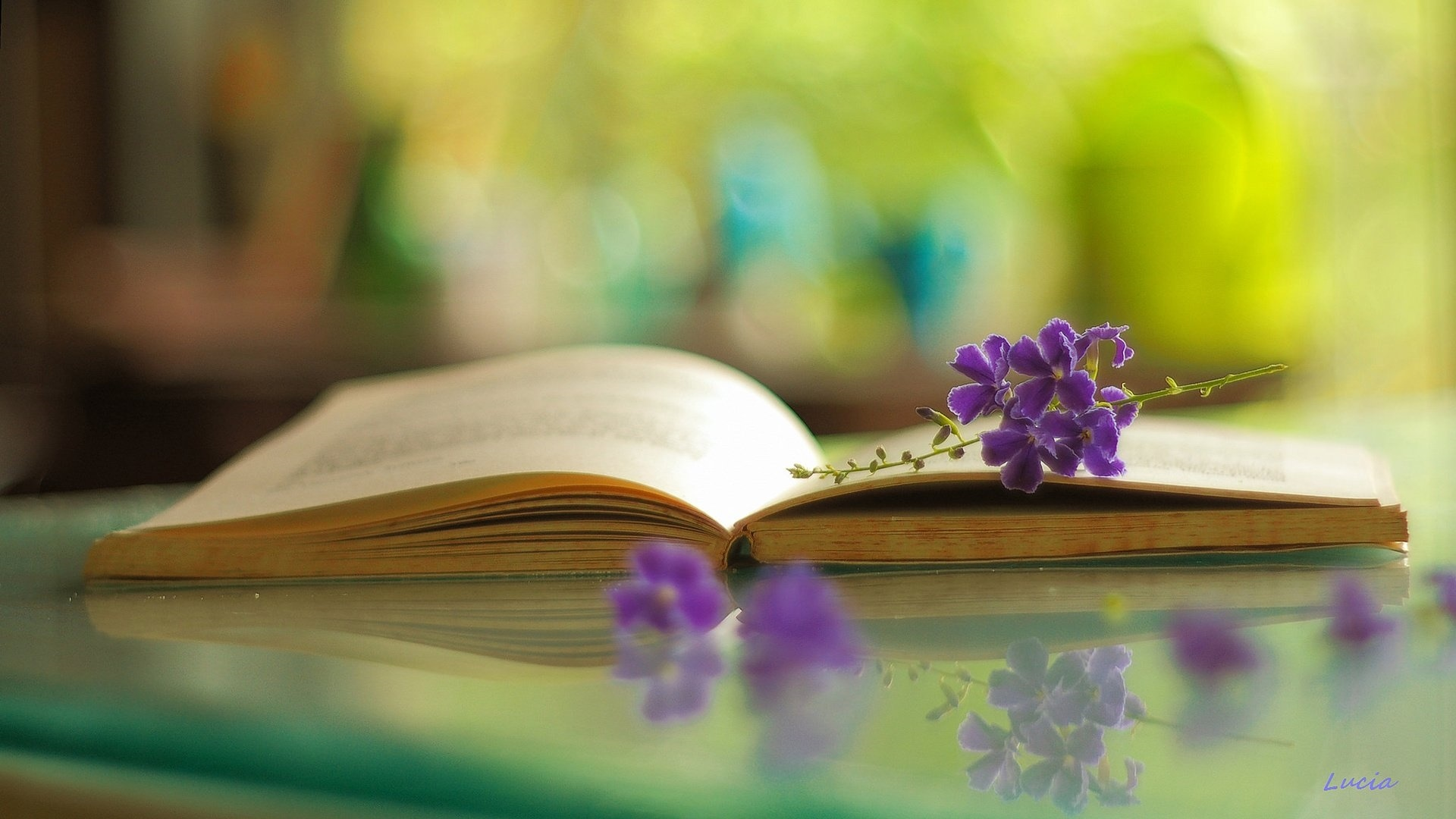 Book And Flower wallpaper photo hd