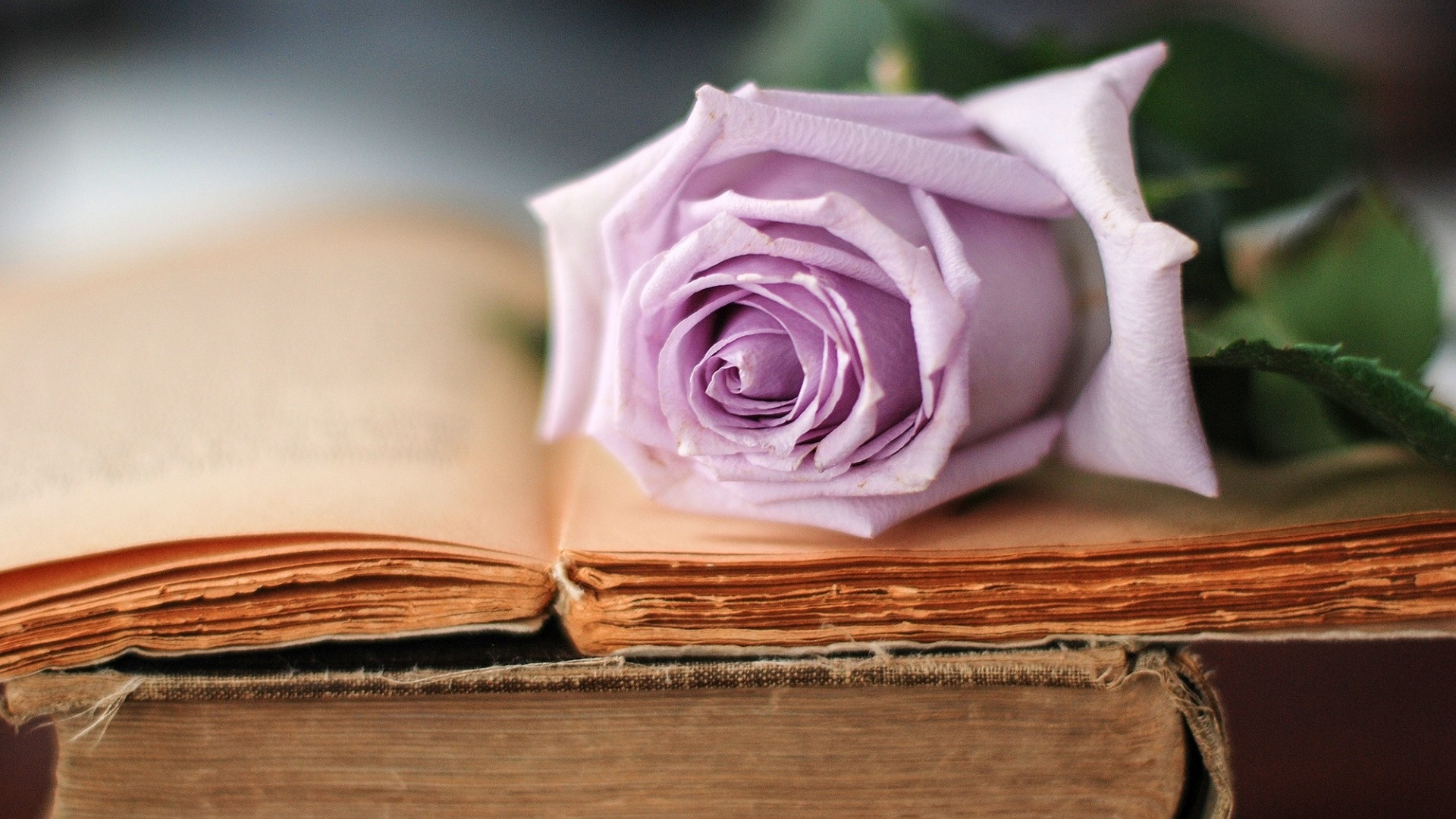 Book And Flower HD Wallpaper