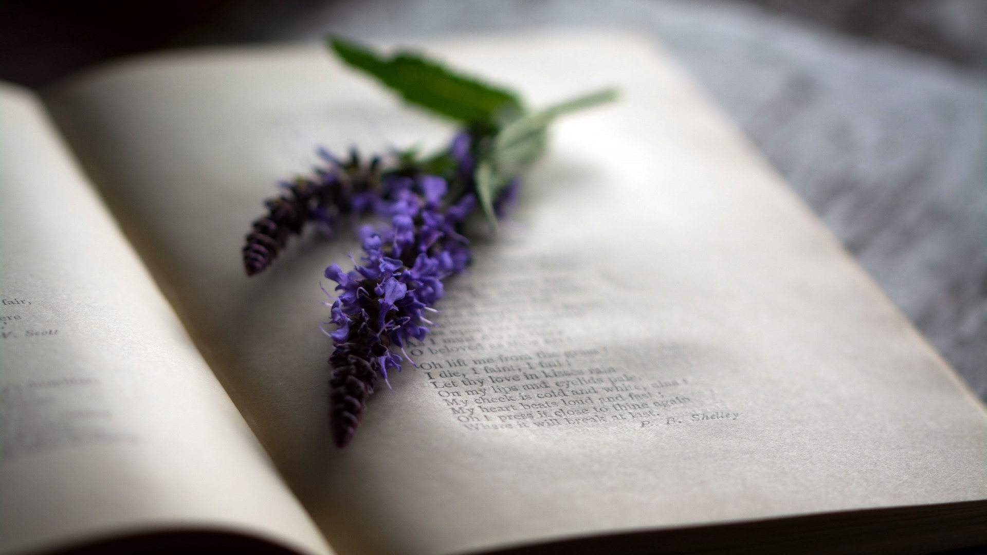 Book And Flower Pic