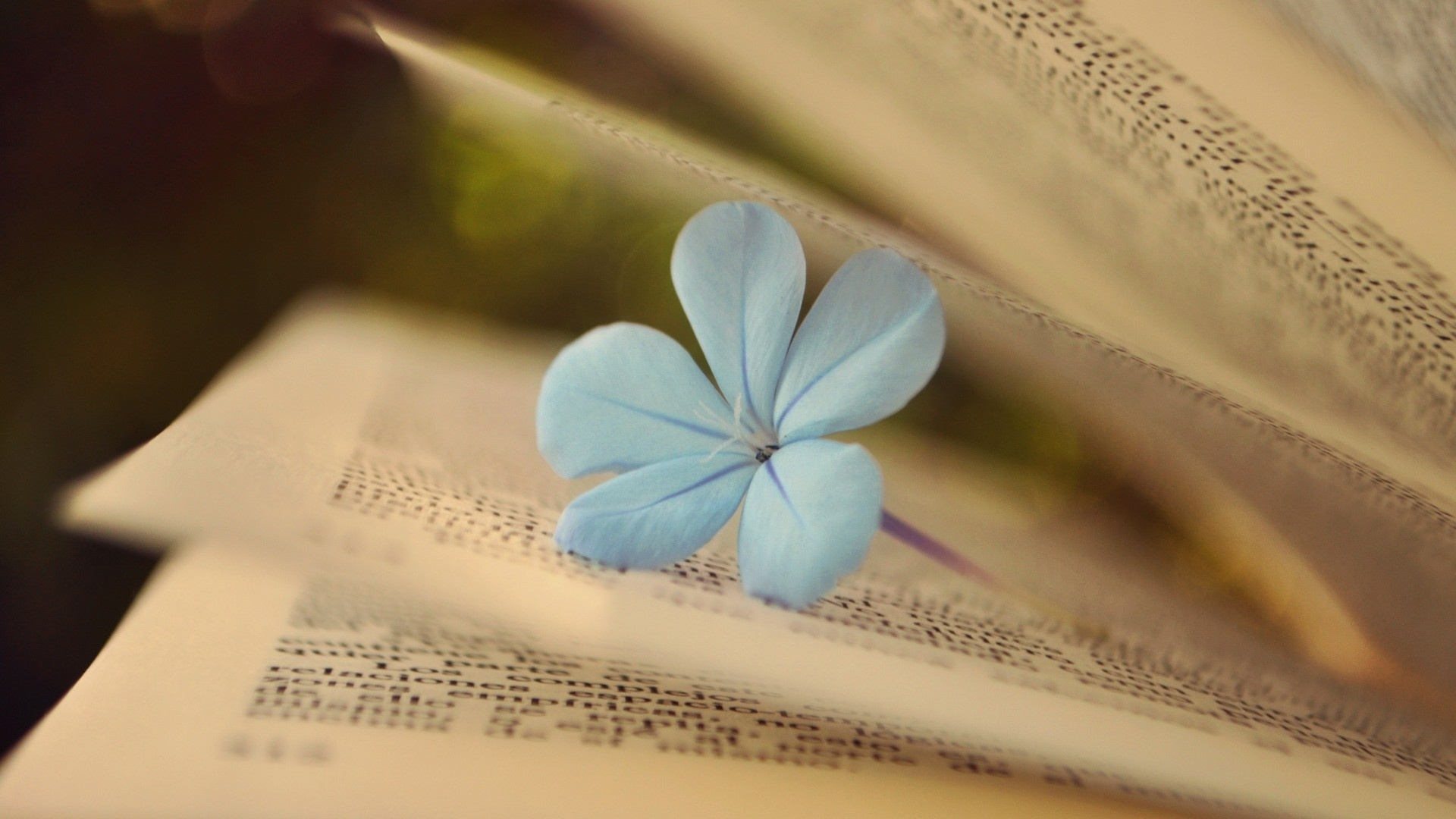 Book And Flower Background