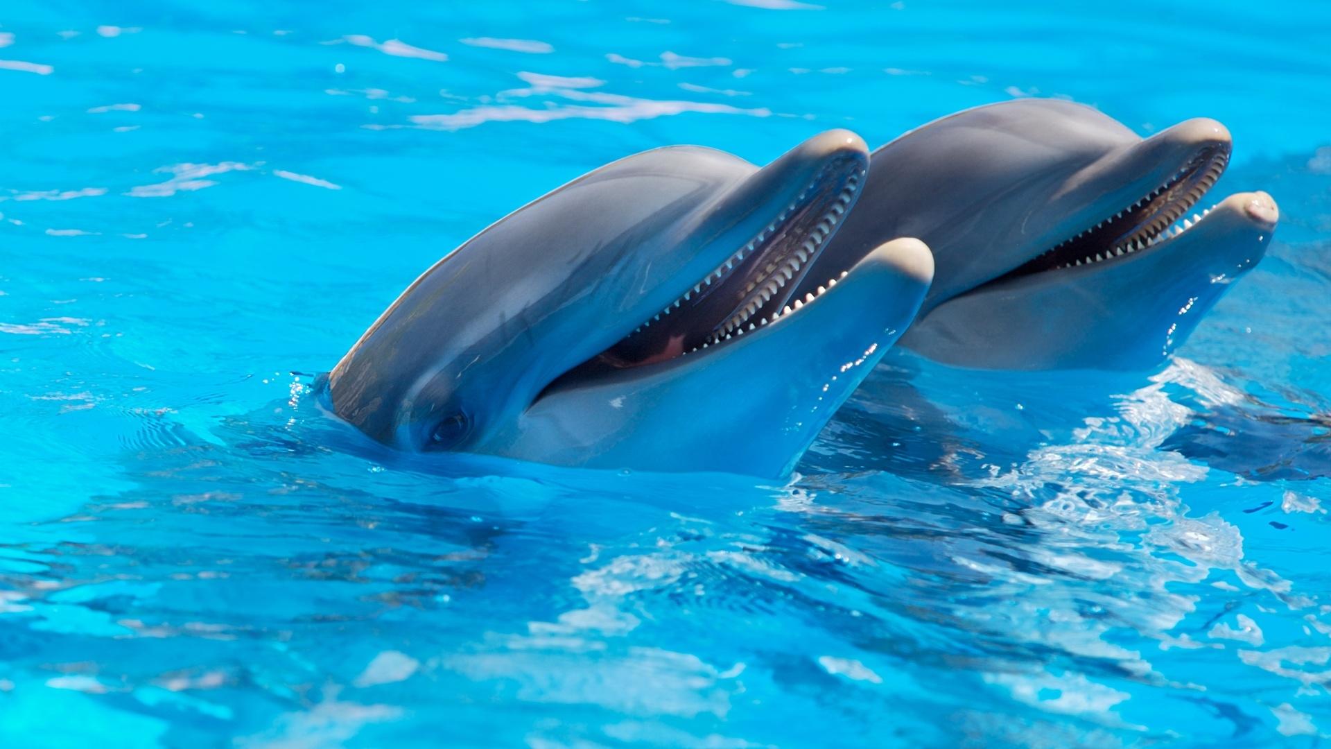 Dolphin Desktop Wallpaper