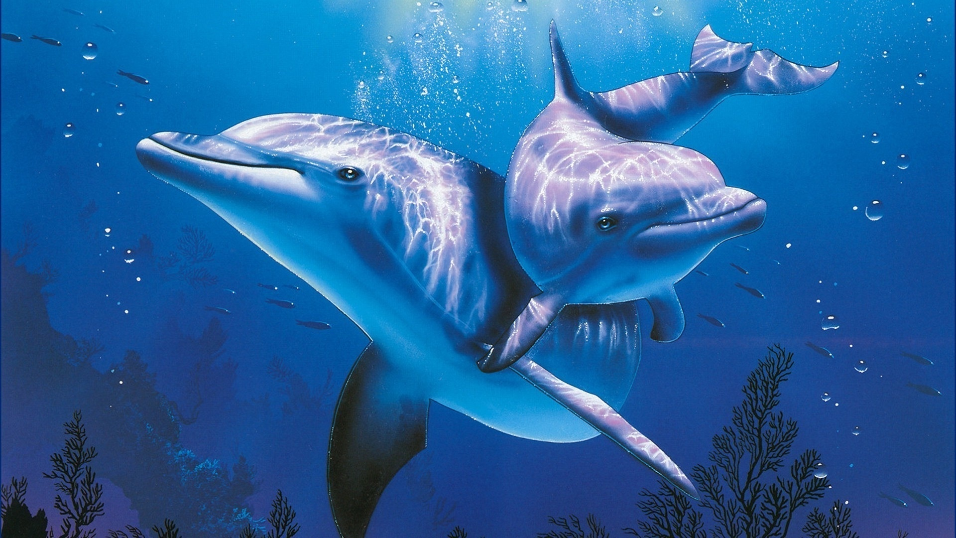 Dolphin Pic