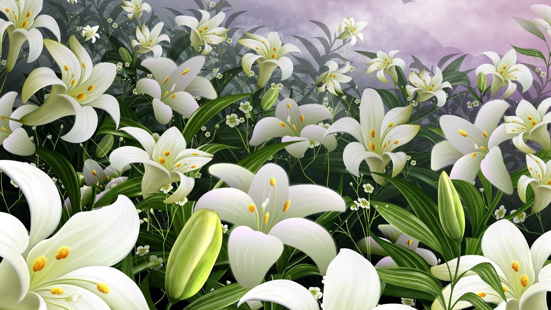 Lily Flower computer wallpaper