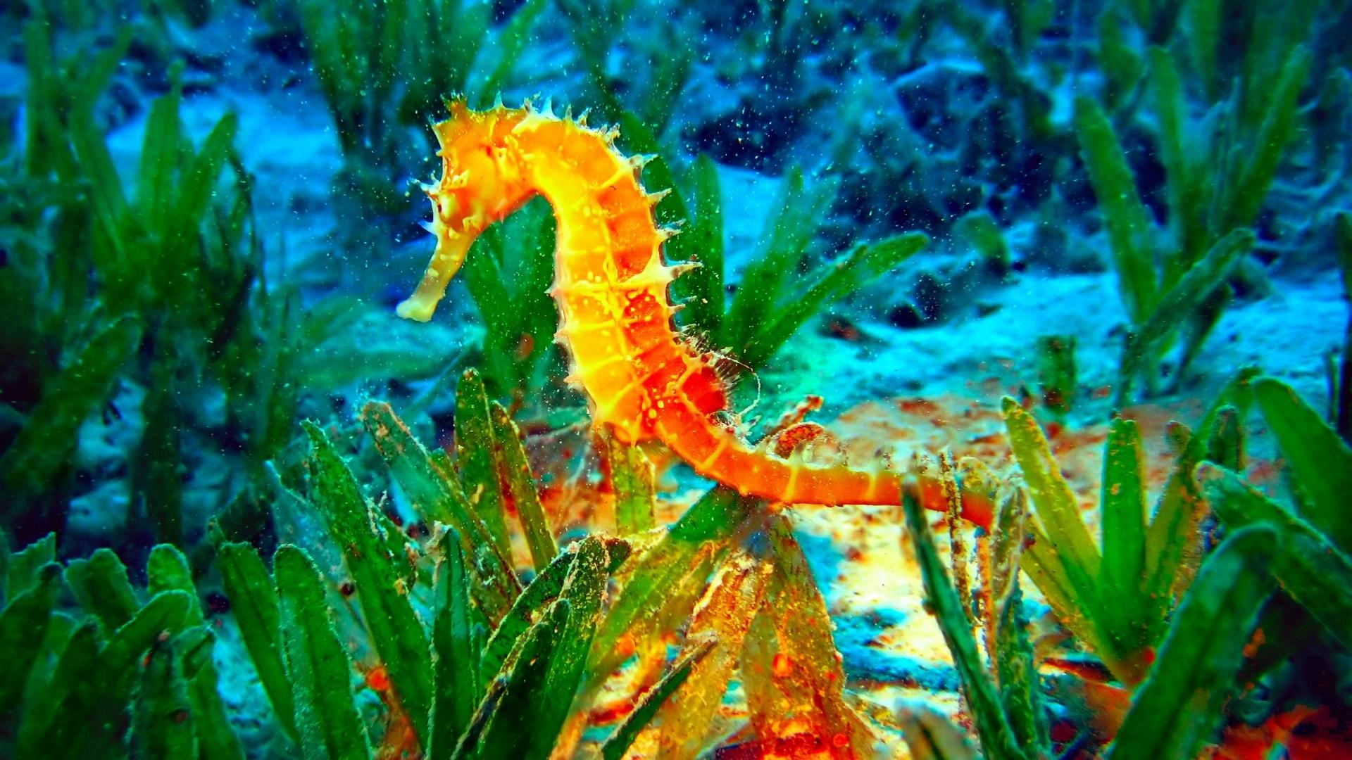 Seahorse Picture