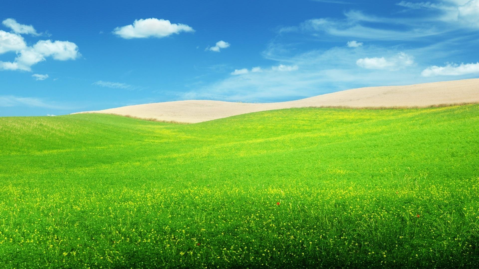 Field wallpaper for desktop