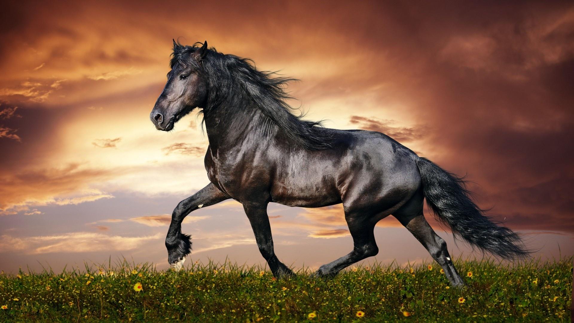Black Horse best background