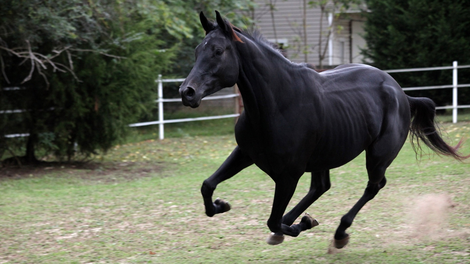 Black Horse background picture