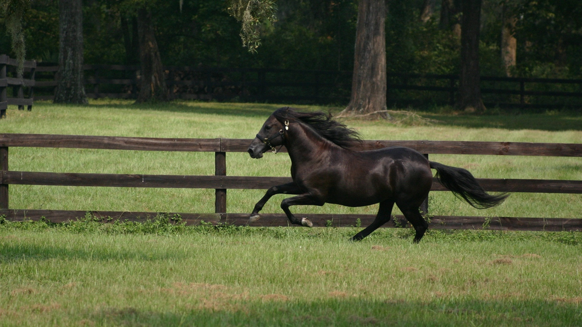 Black Horse pc wallpaper