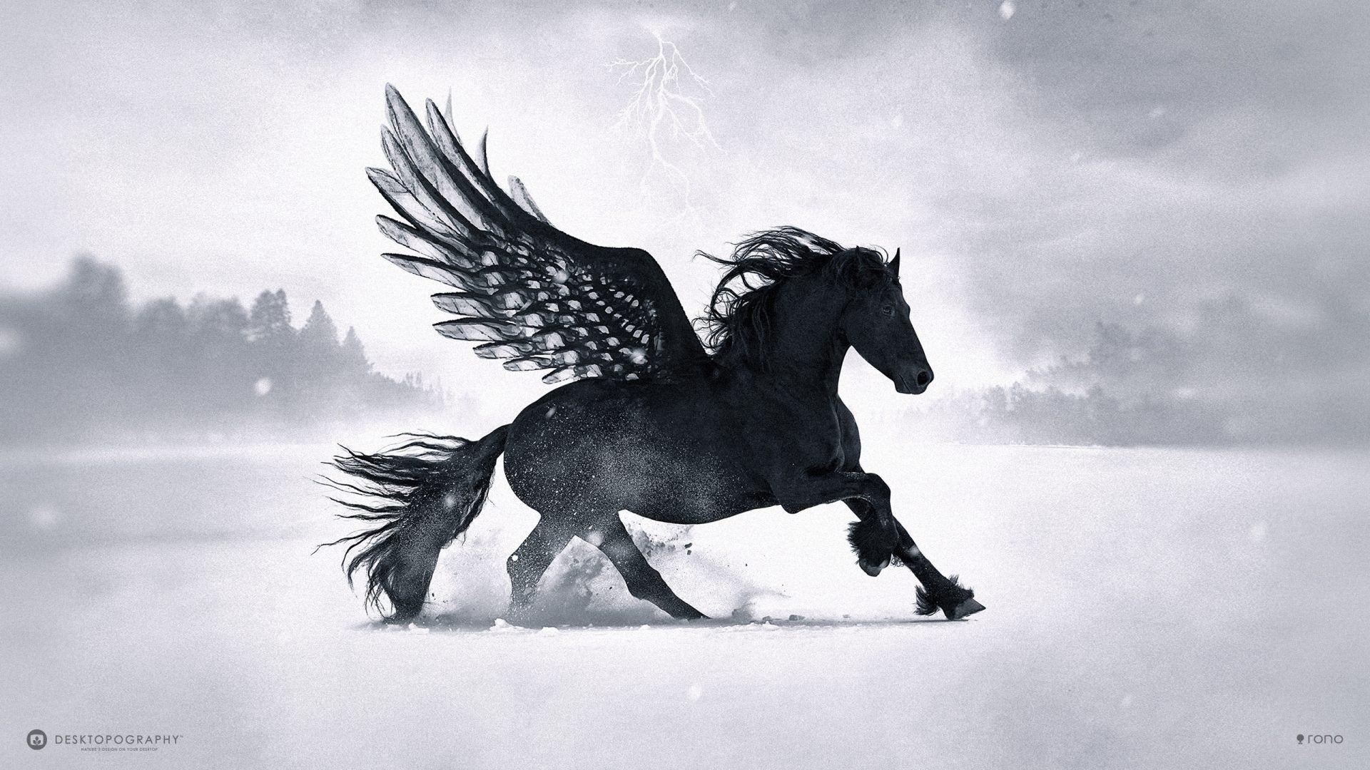 Black Horse best wallpaper