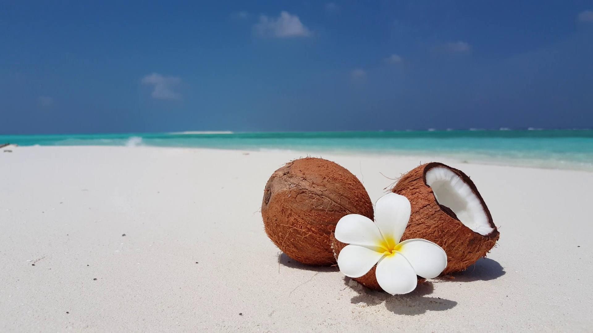 Coconuts By The Sea windows wallpaper