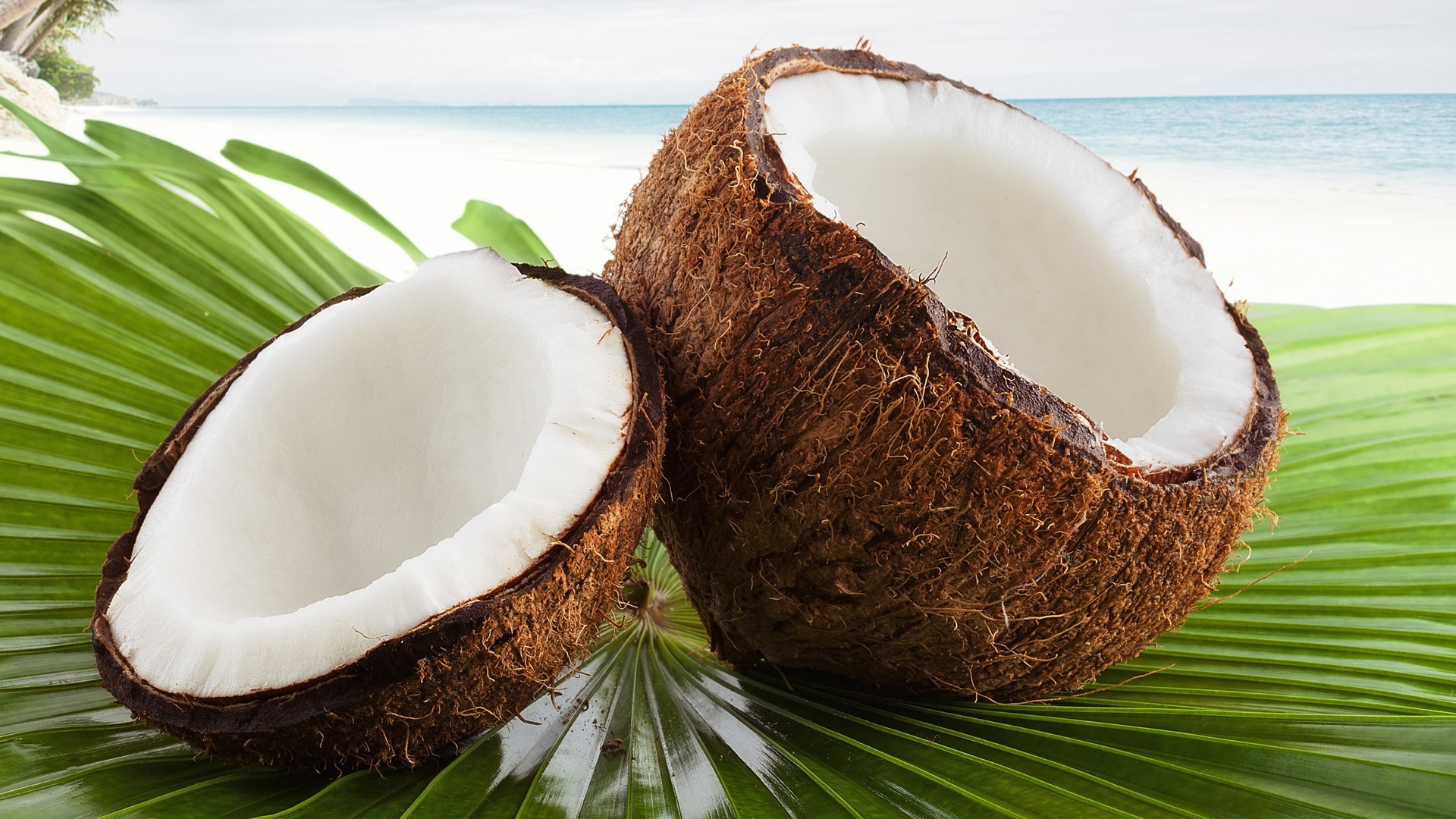 Coconuts By The Sea hd background
