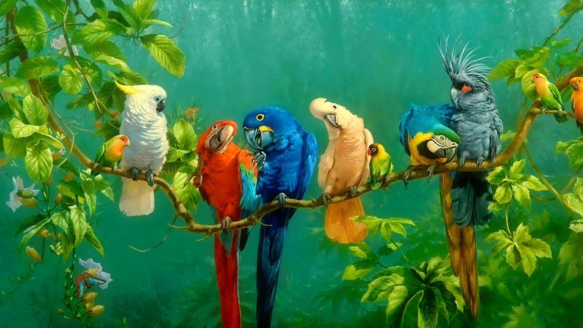 Colorful Bird pc wallpaper