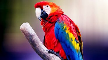 Colorful Bird wallpaper hd