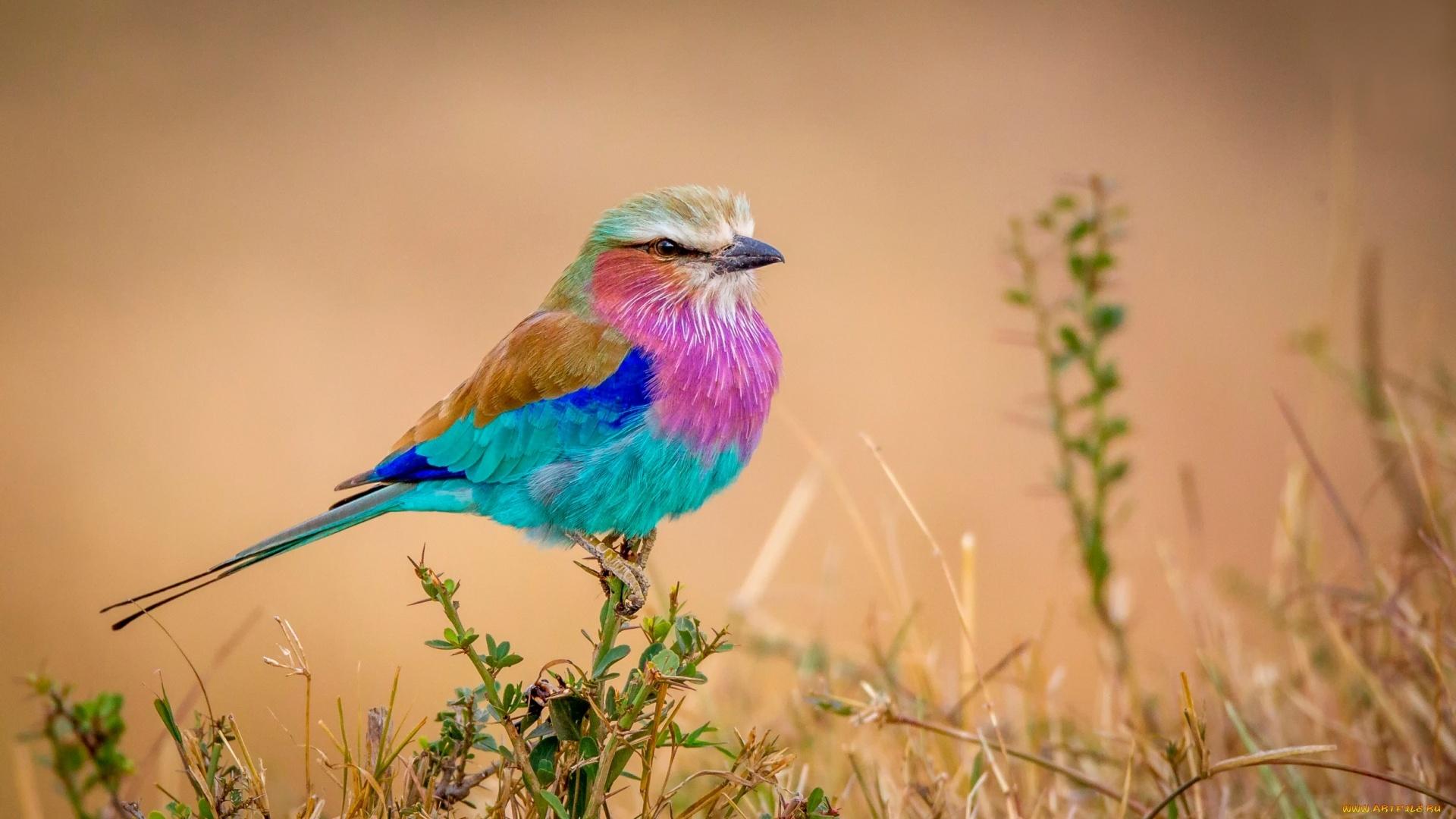 Colorful Bird 1080p wallpaper