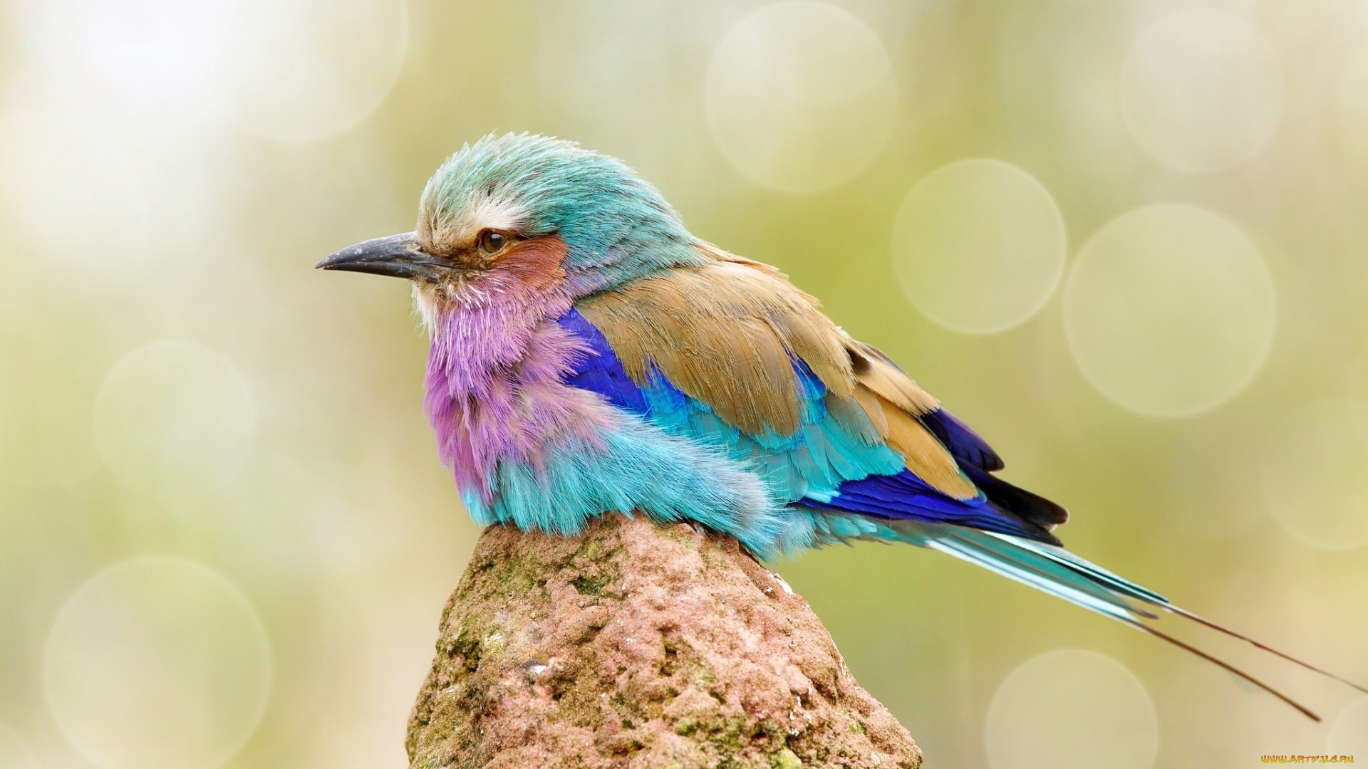 Colorful Bird free photo