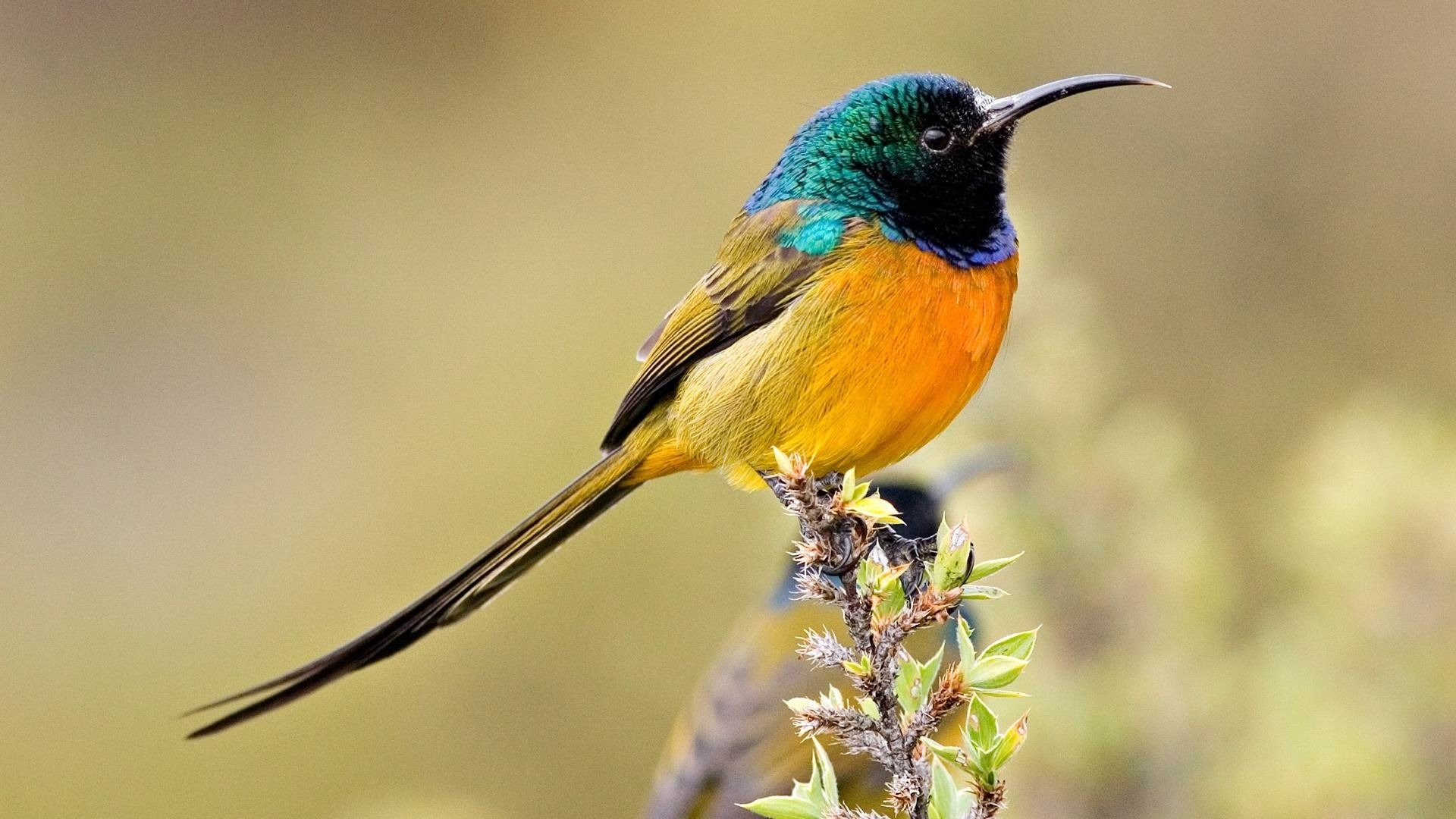 Colorful Bird desktop wallpaper free download