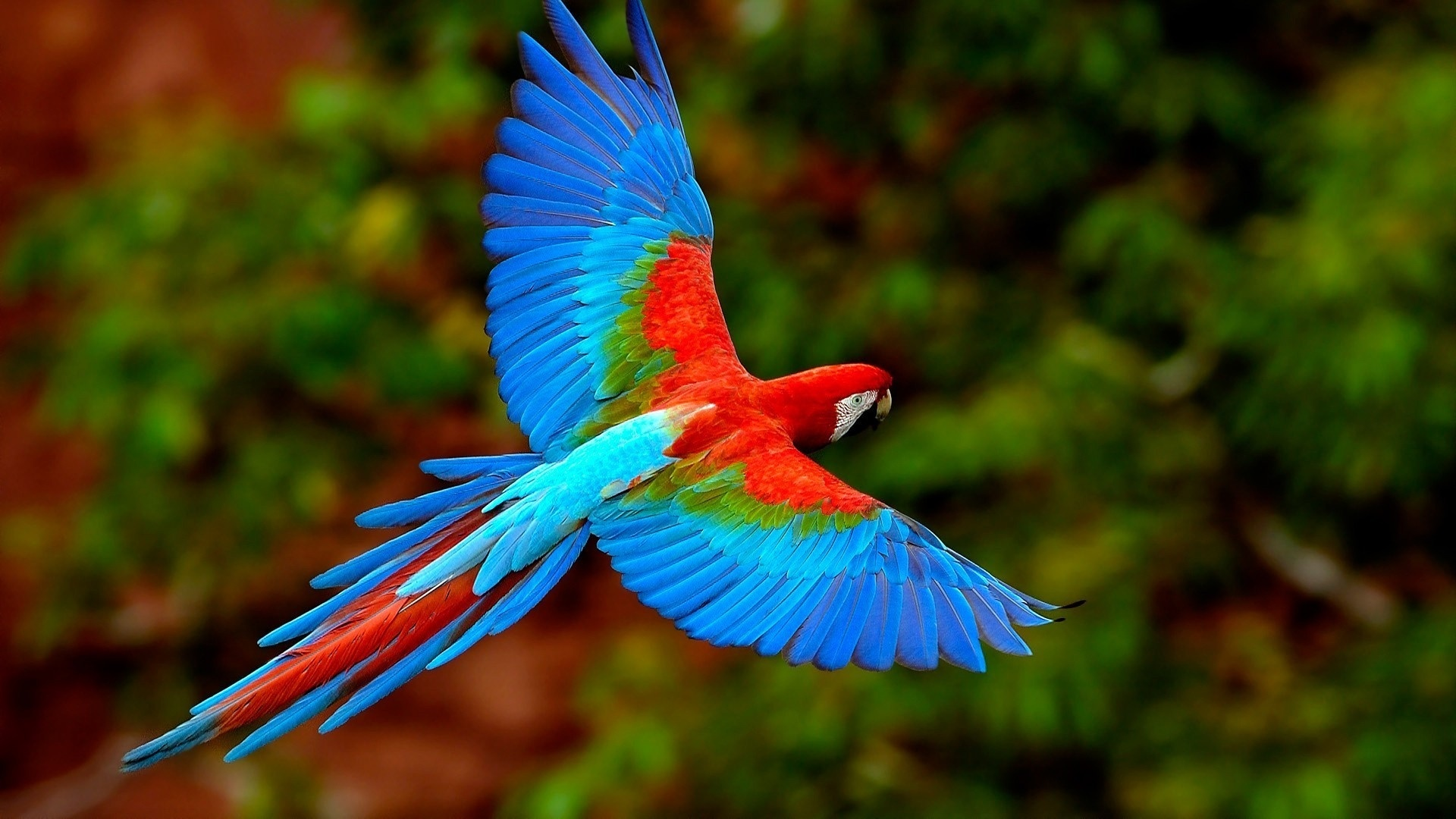 Colorful Bird desktop background