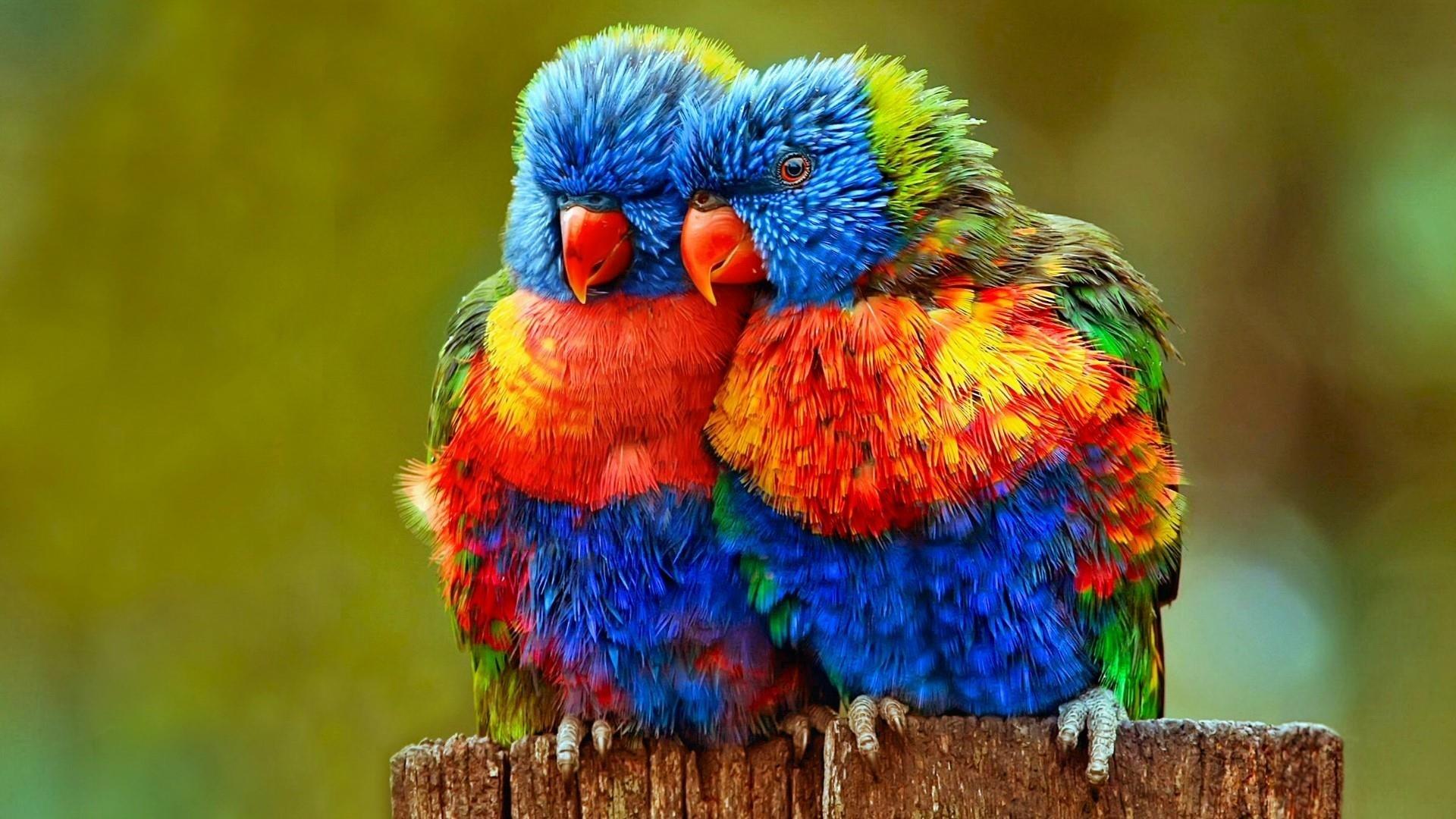 Colorful Bird best wallpaper