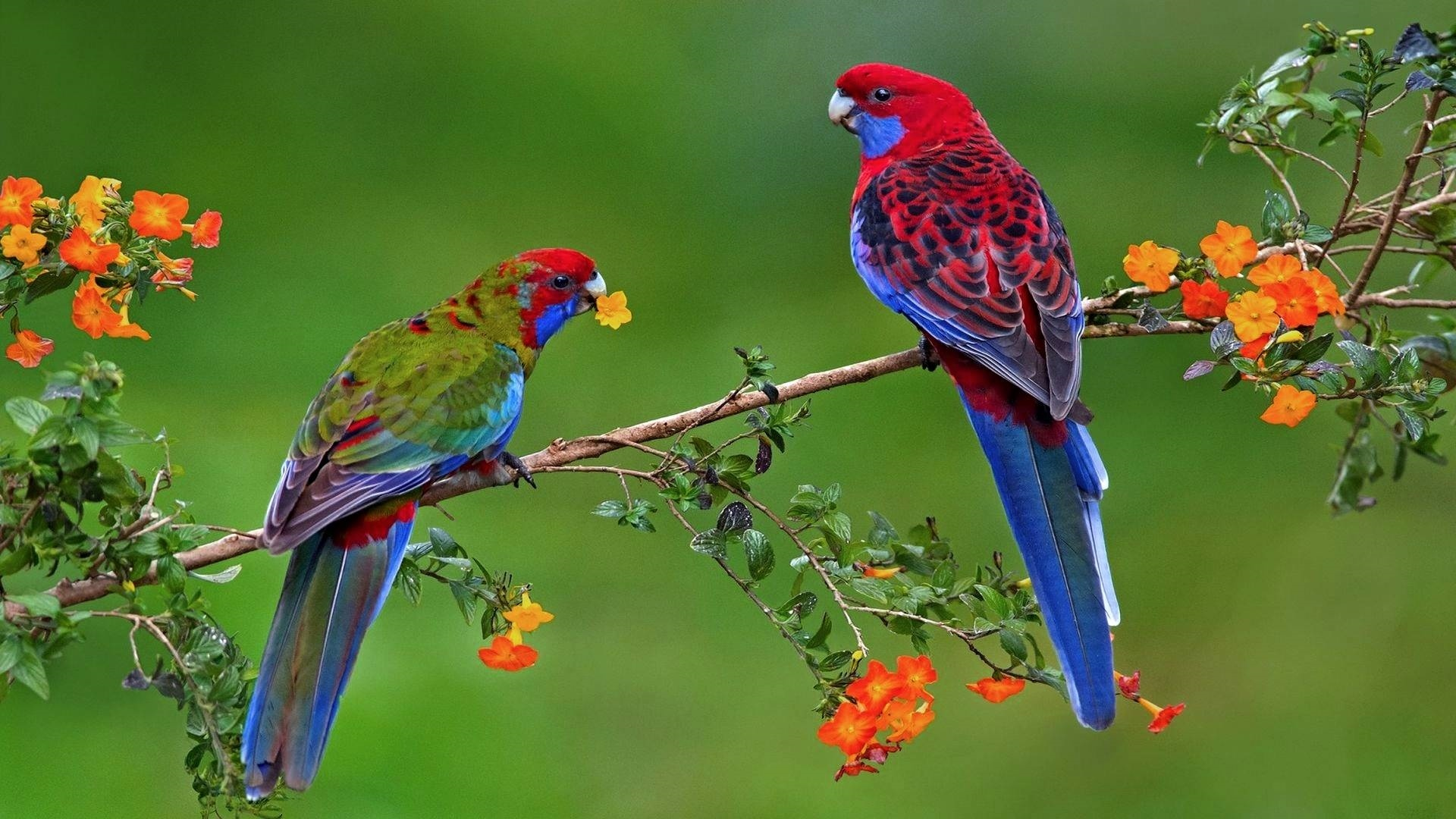 Colorful Bird free background